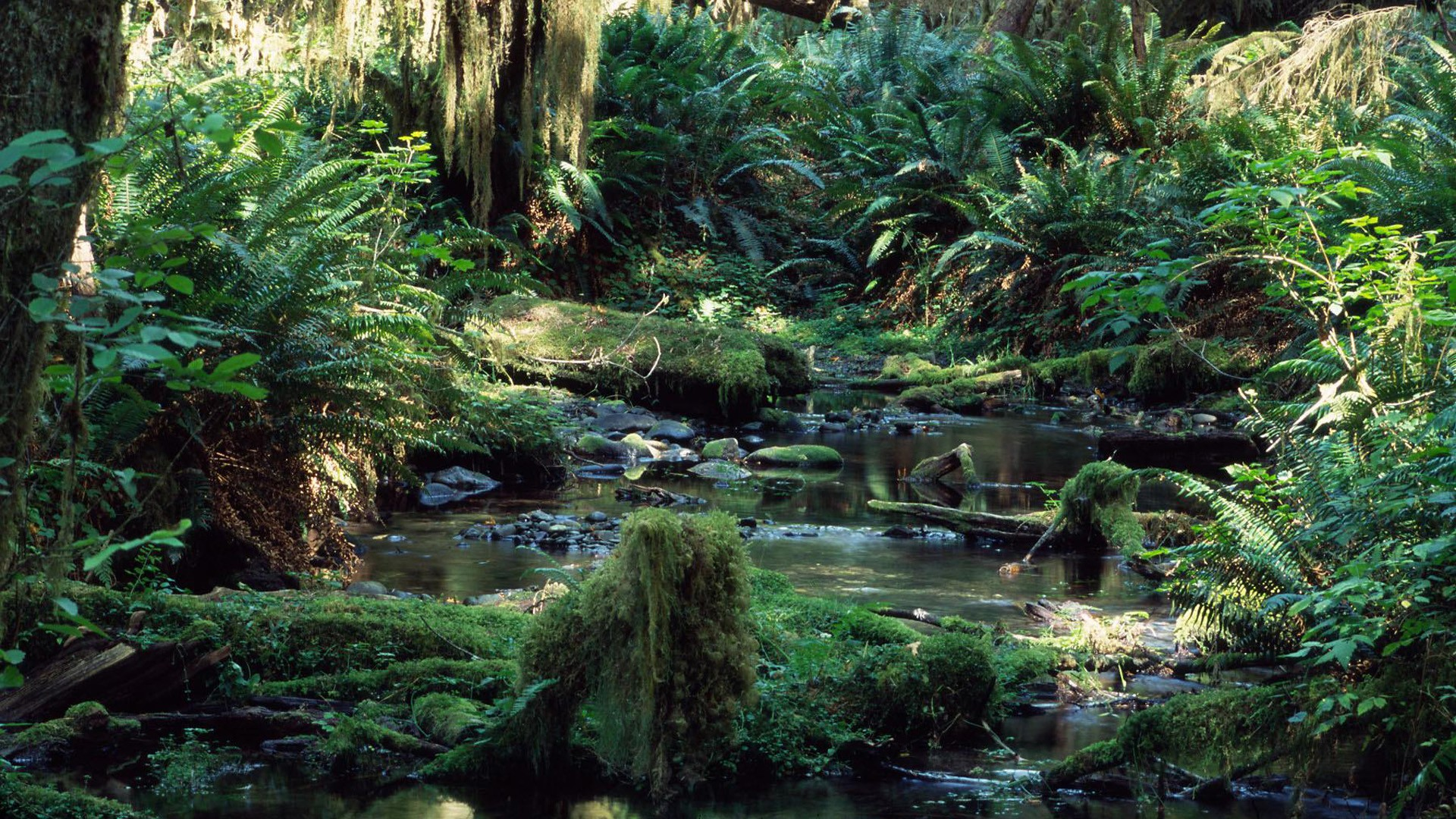 Rainforest Background 183 ① Download Free Beautiful Full Hd