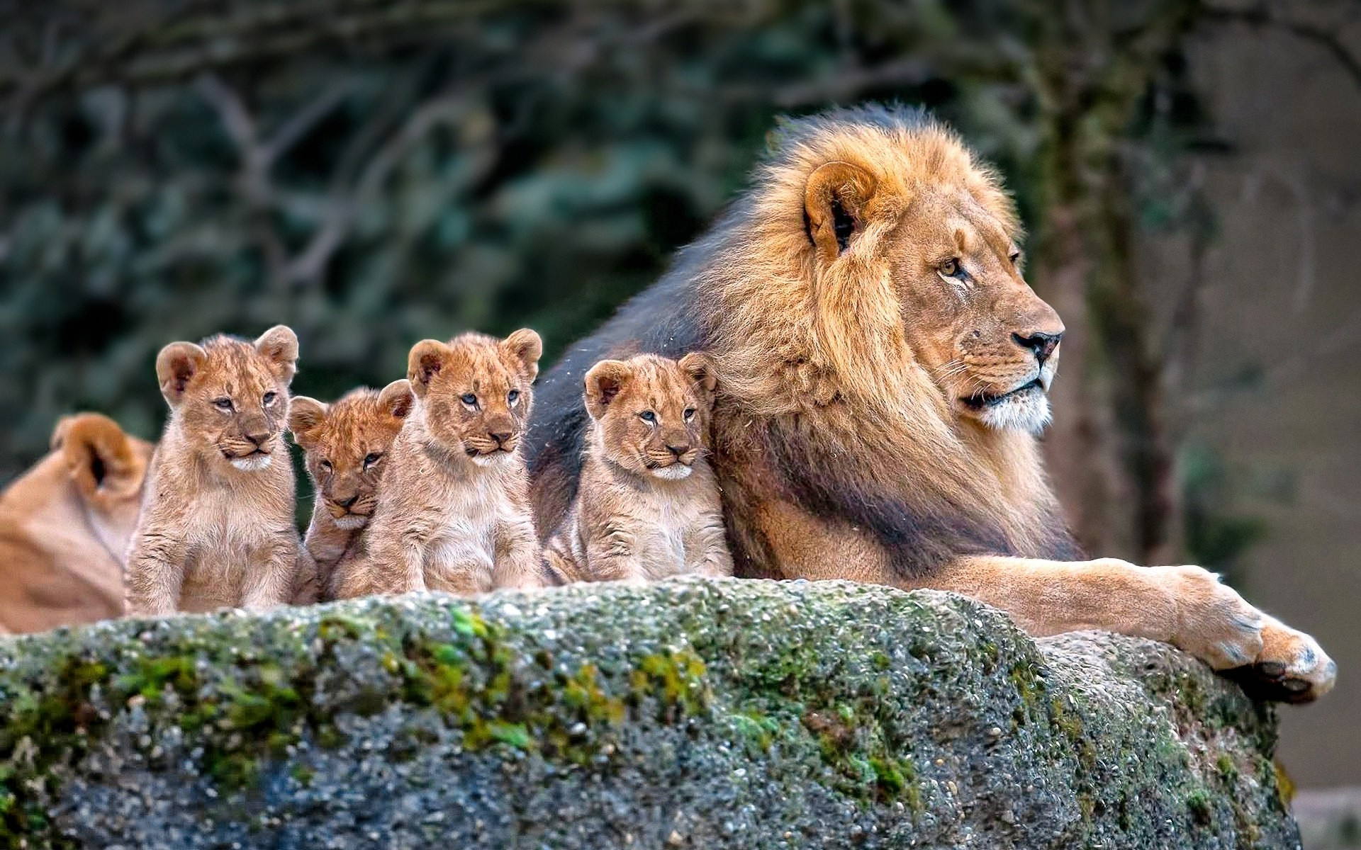 Baby animals wallpaper wallpapertag - Animal 1920x1080 ...