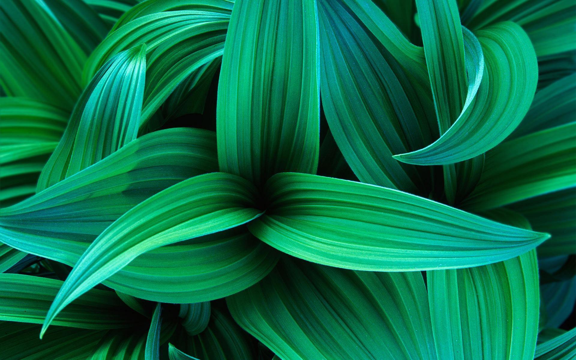Green Leaves Wallpaper ·①