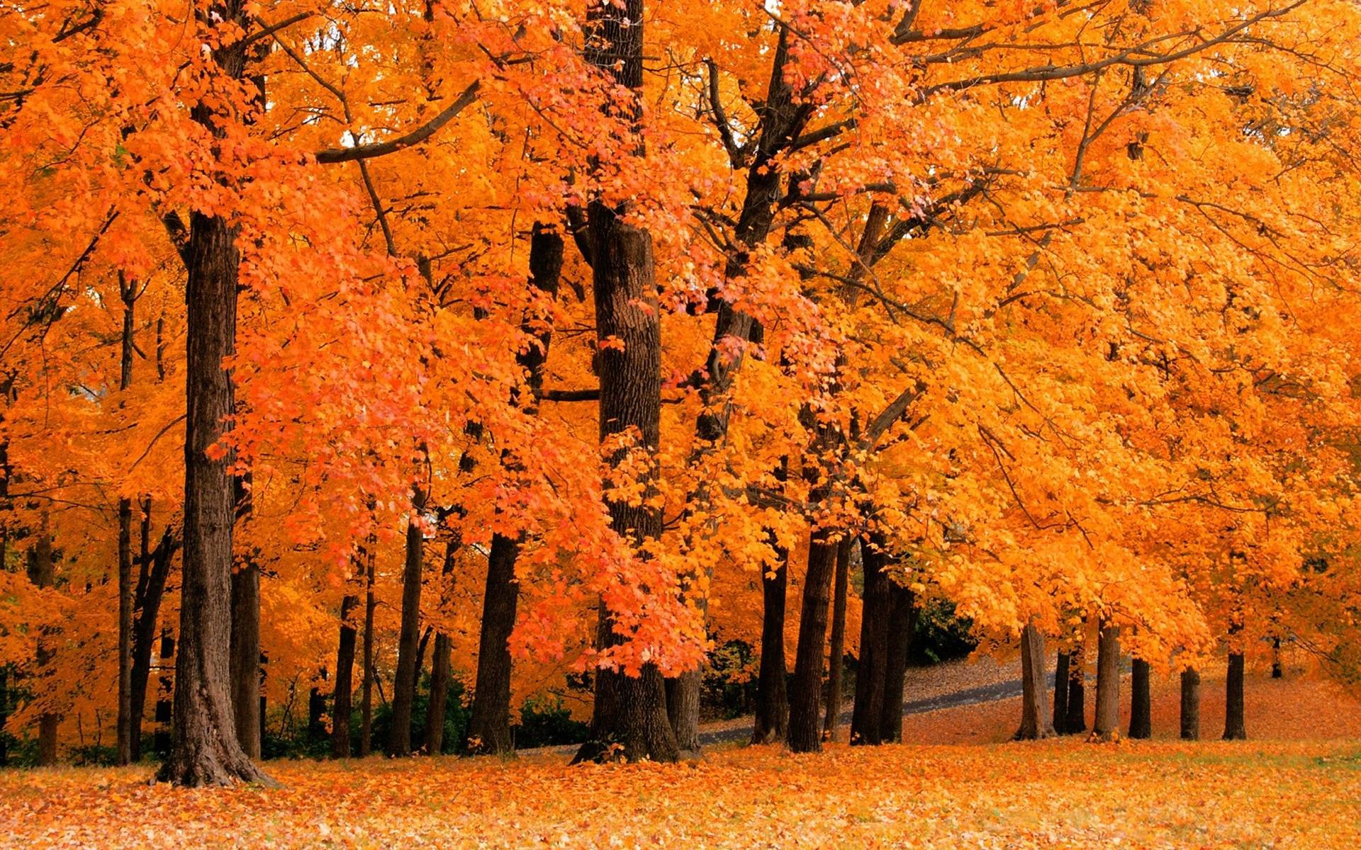 fall leaves desktop background download free stunning wallpapers