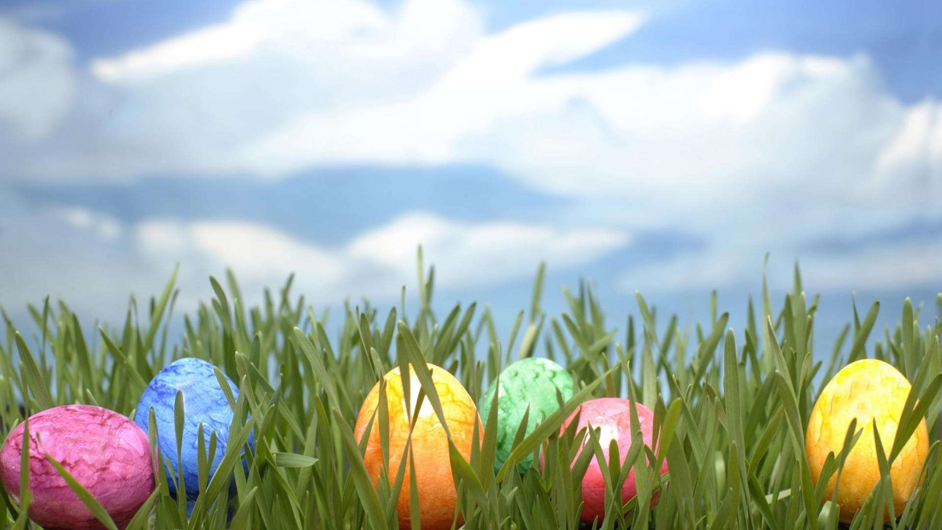 Easter Egg Background 1 Download Free Amazing HD Backgrounds For