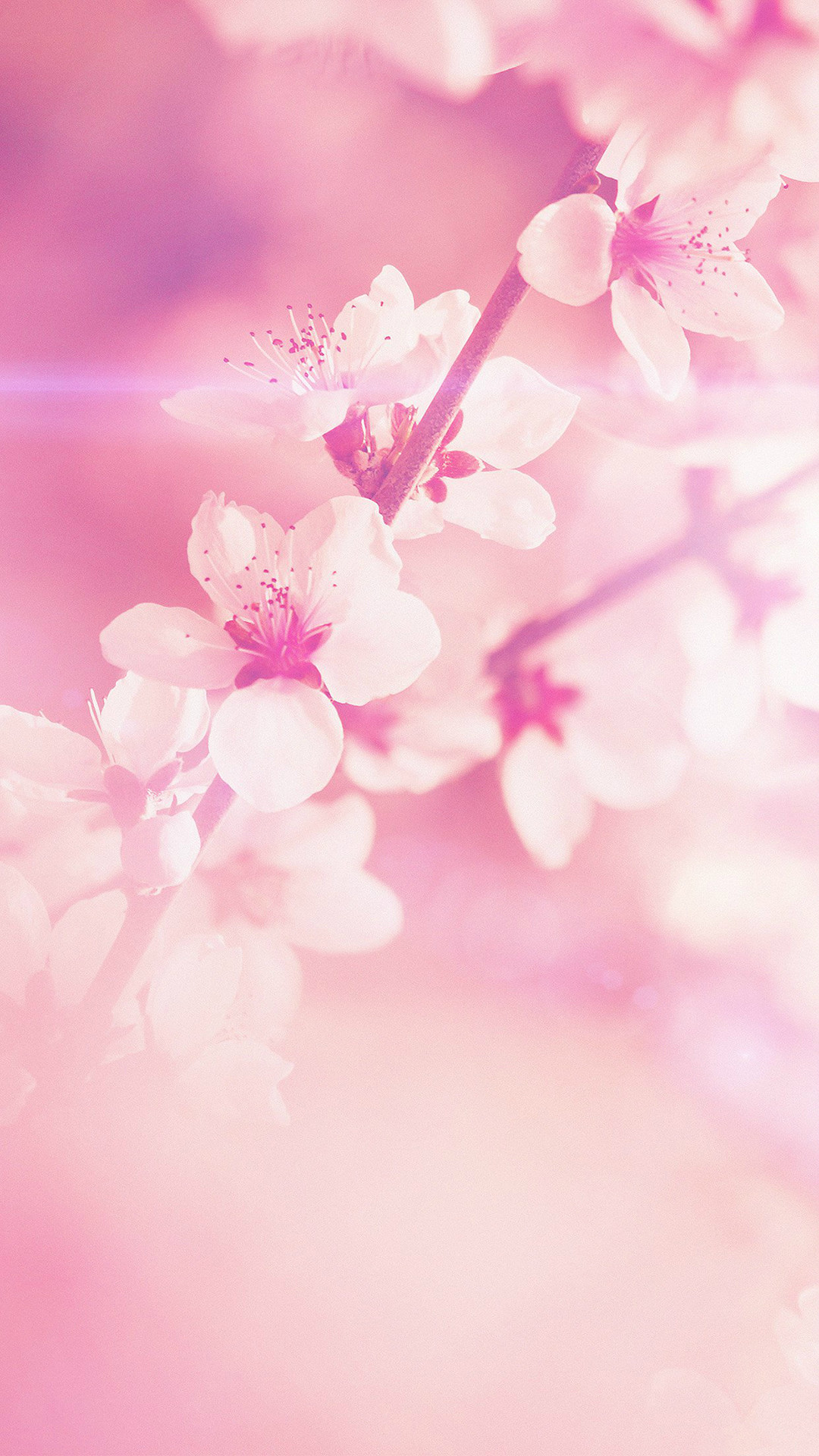 Flower pink background close up bud cherry flower pink mightylinksfo