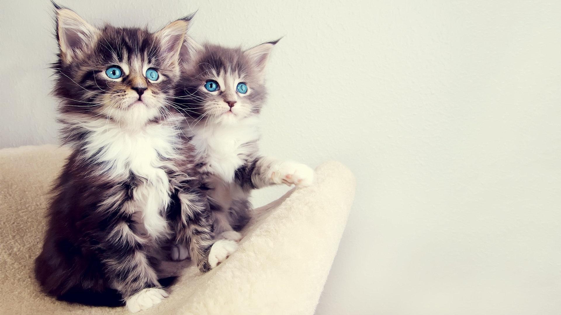 Cute kitten wallpapers wallpapertag - Kitten wallpaper ...