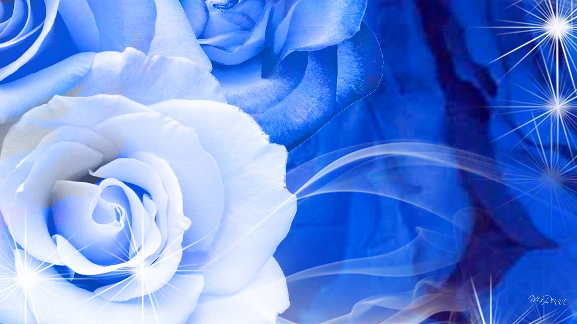blue rose wallpaper 183��