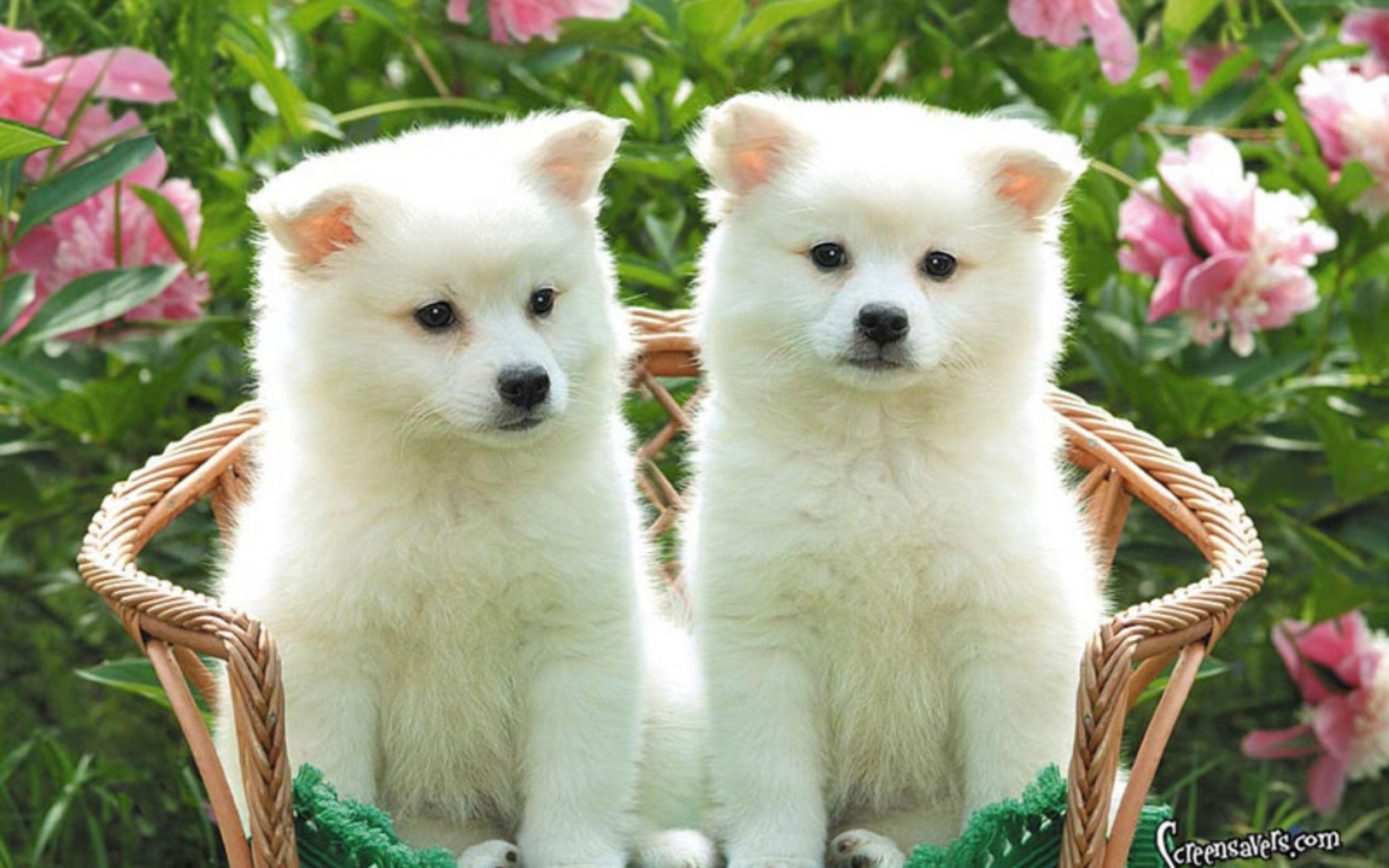 Puppies And Kittens Wallpaper Wallpapertag