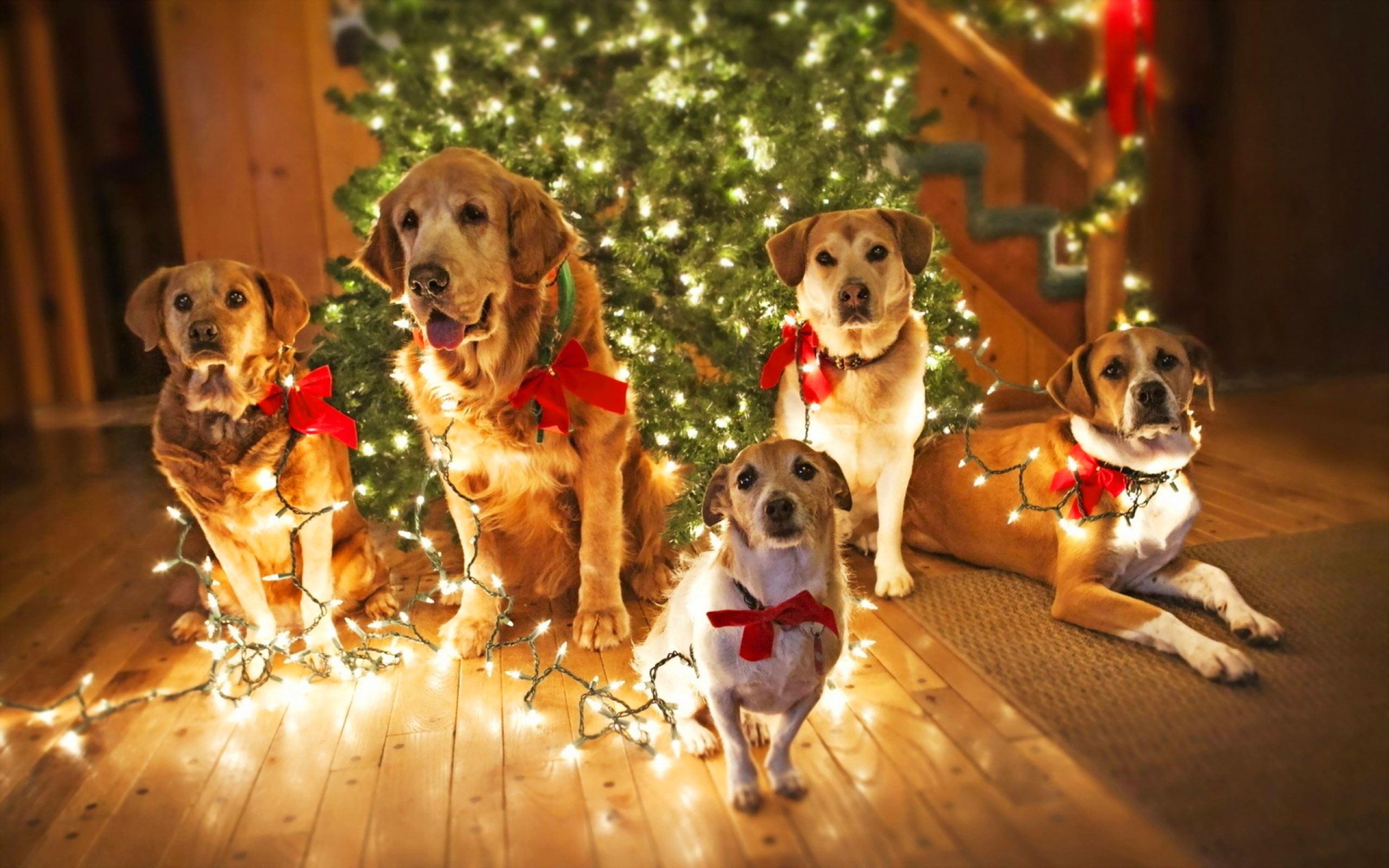 Christmas Dog Wallpaper ·①