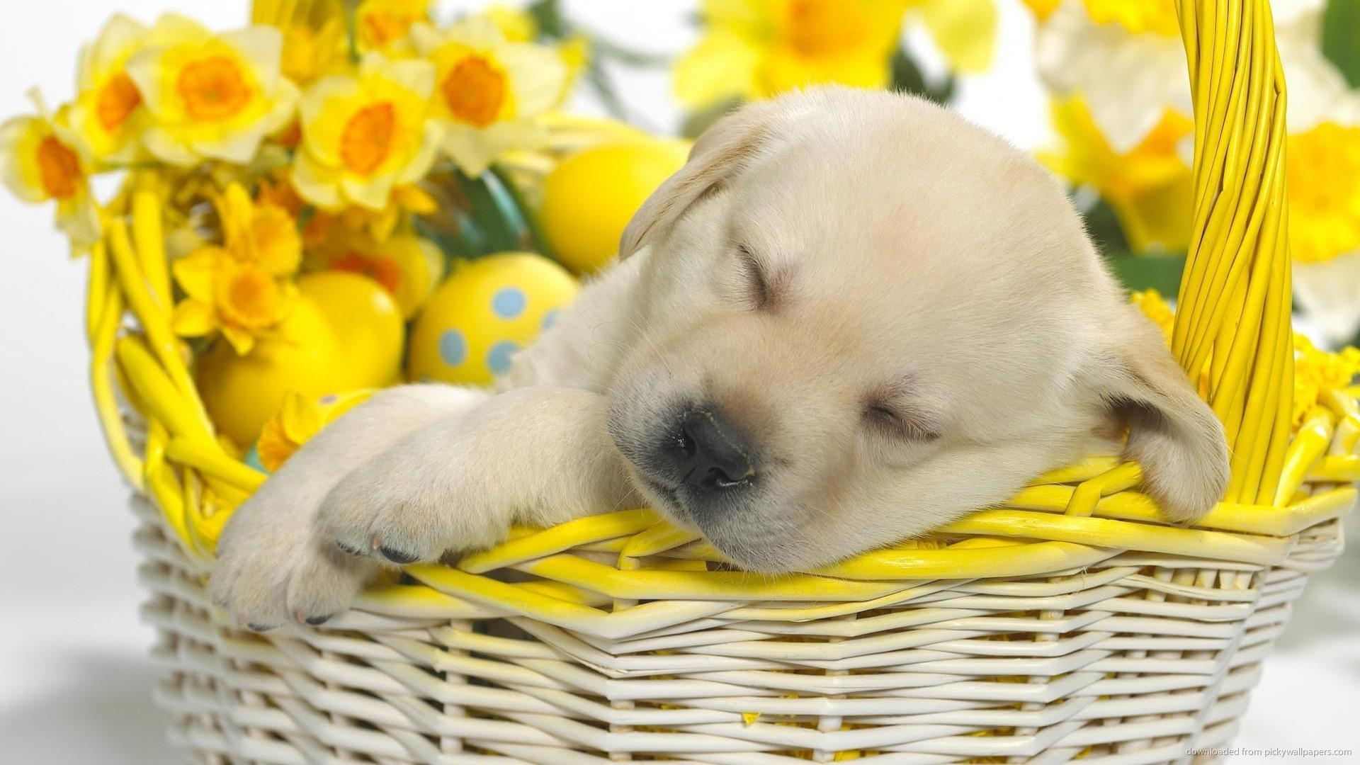 Cute Easter Wallpapers Wallpapertag
