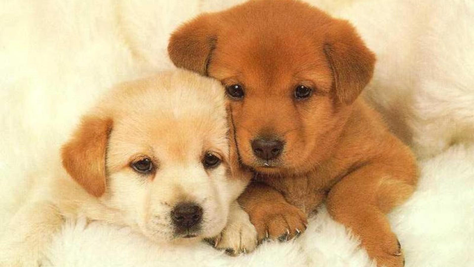 HD Puppy Wallpaper · Download · 1920x1200