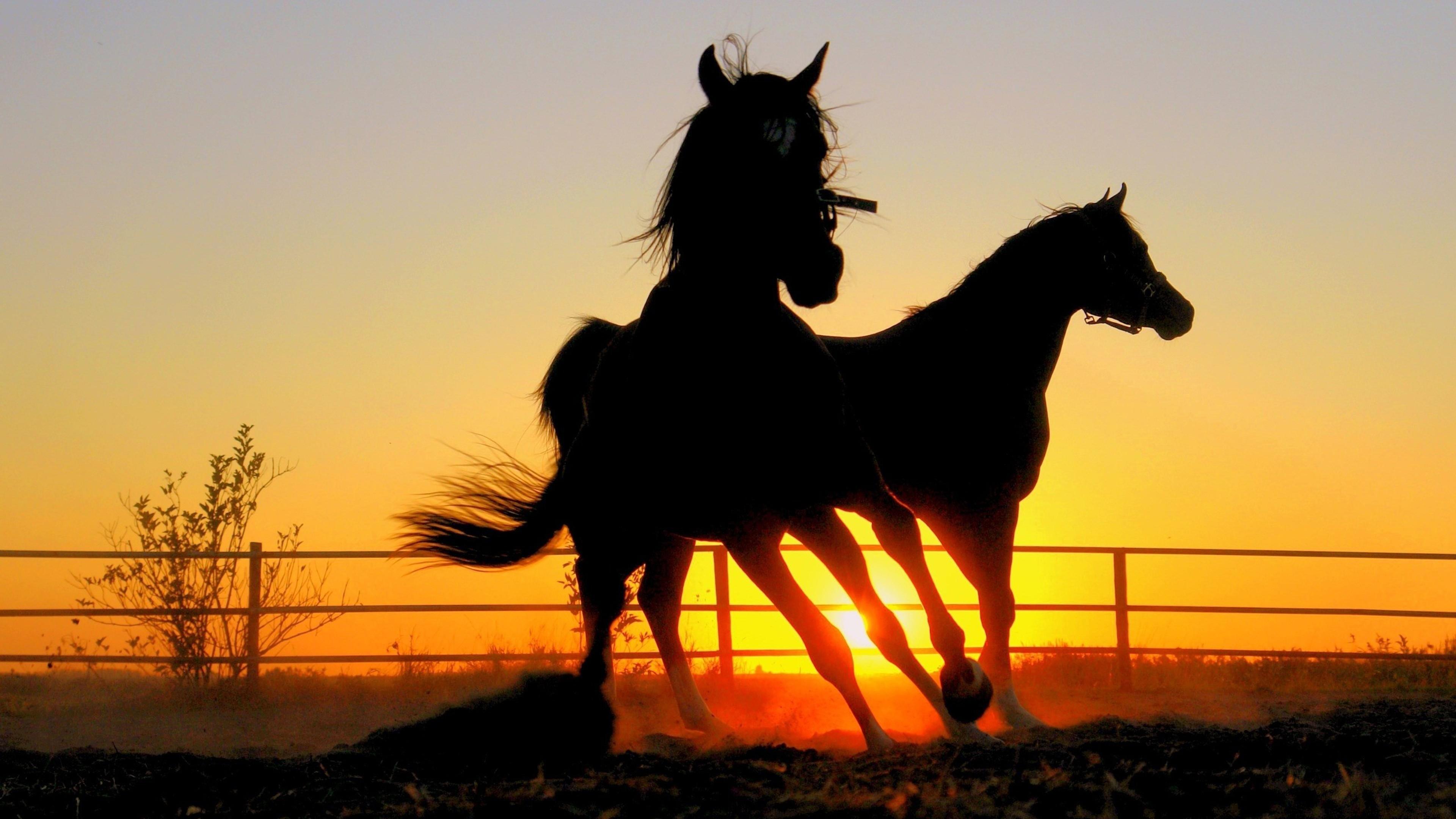 quarter horse wallpaper ·①