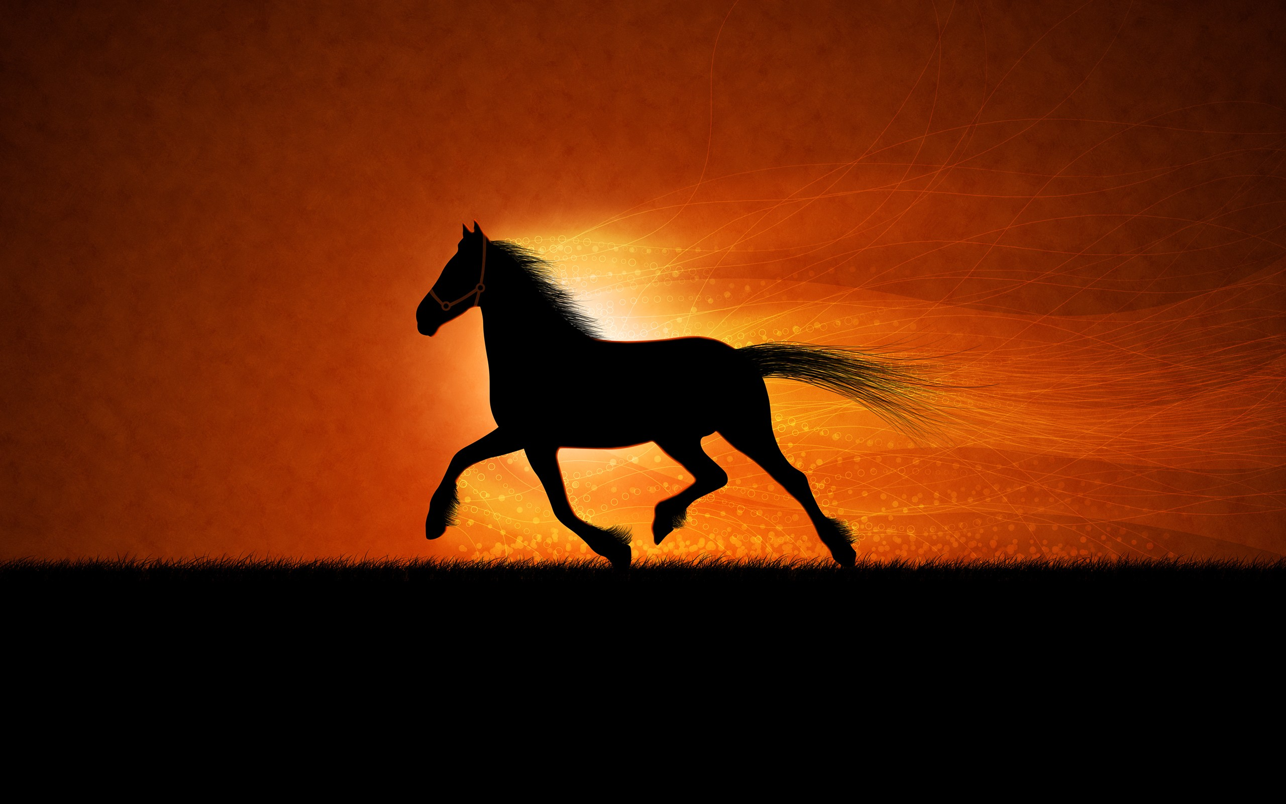60 Horse Backgrounds 1 Download Free Stunning High Resolution