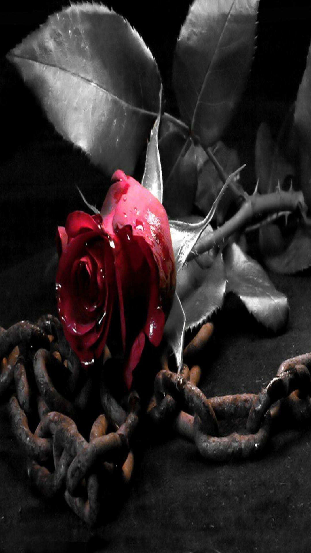 Black roses background wallpapertag - Black and red rose wallpaper ...