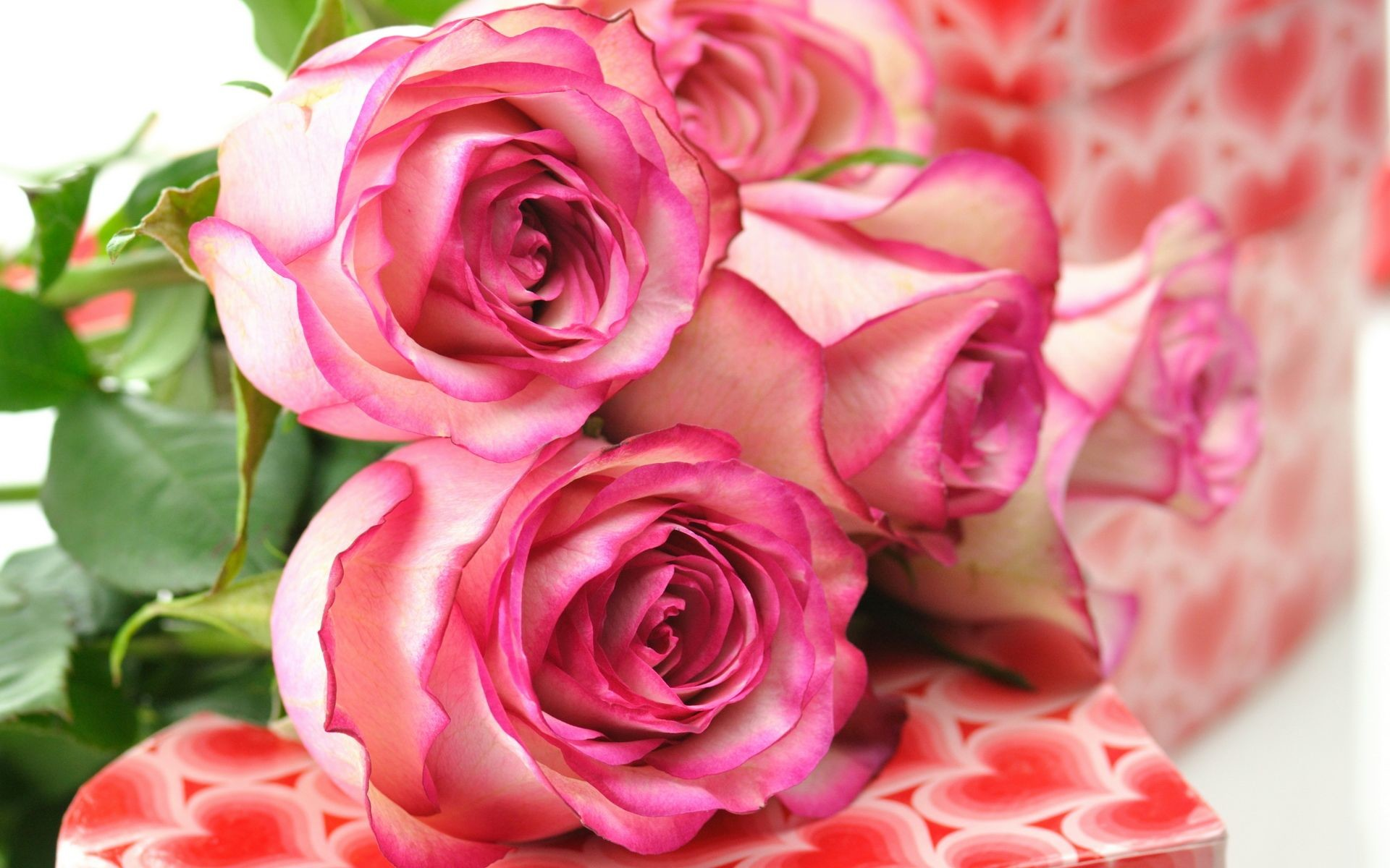 beautiful roses wallpapers ·①