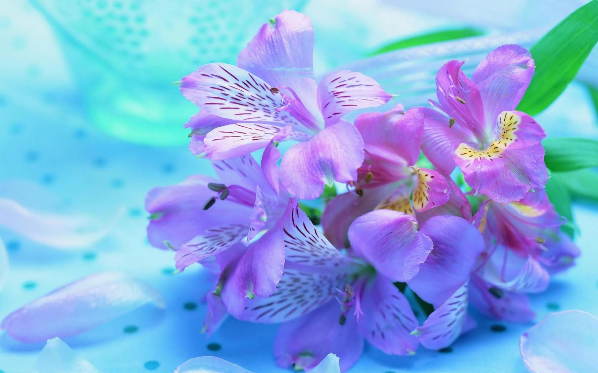 1920x1200 Beautiful Flowers Desktop Wallpapers