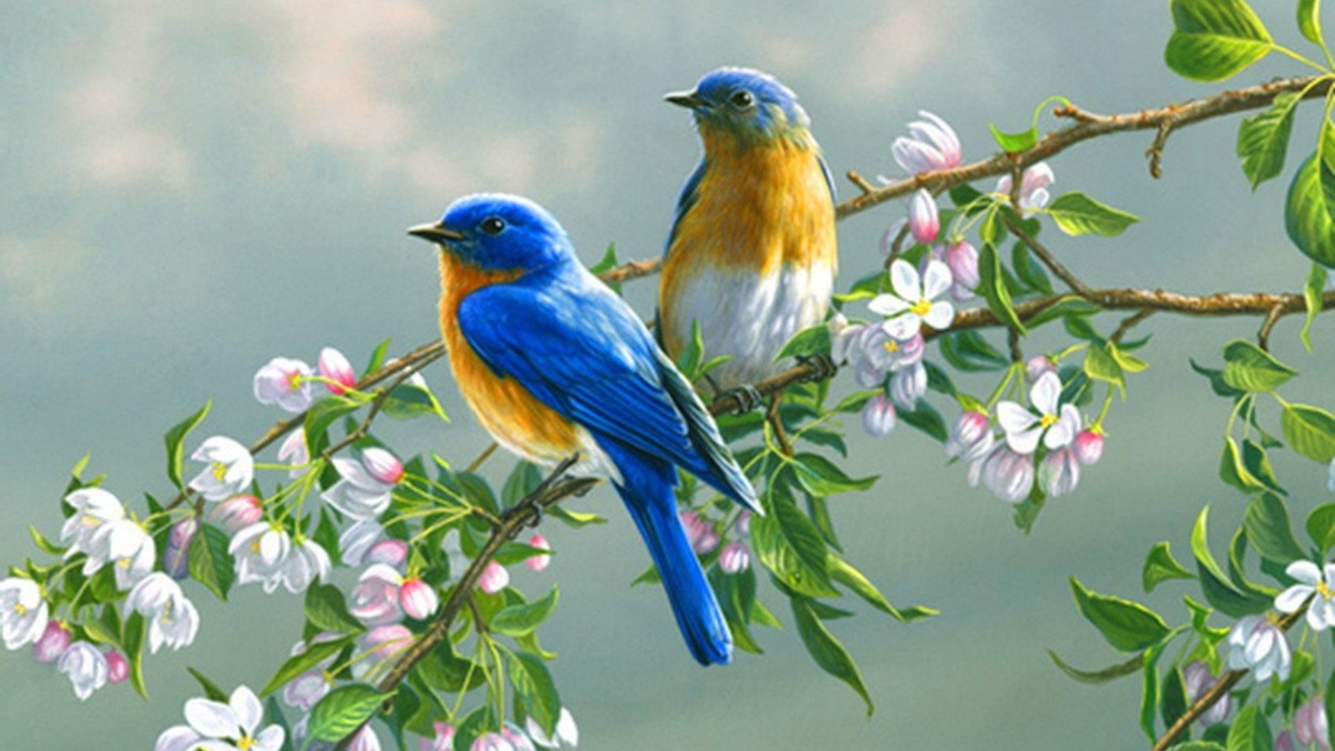 Love Birds Wallpapers ·① WallpaperTag