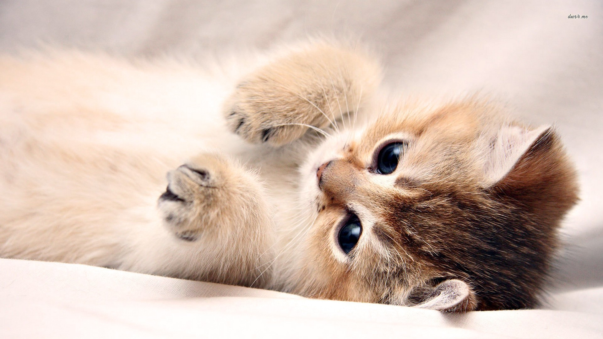 Cute Kitten Pictures Wallpaper ·① WallpaperTag