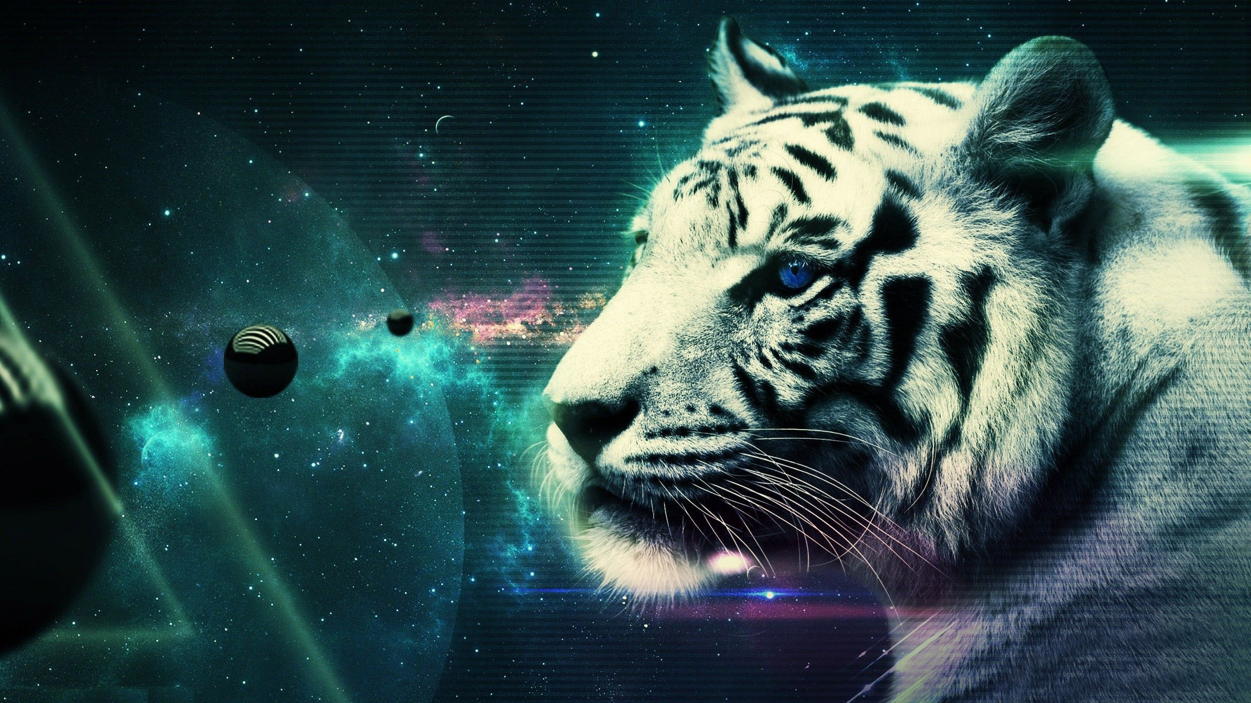 white tiger wallpaper hd ·①