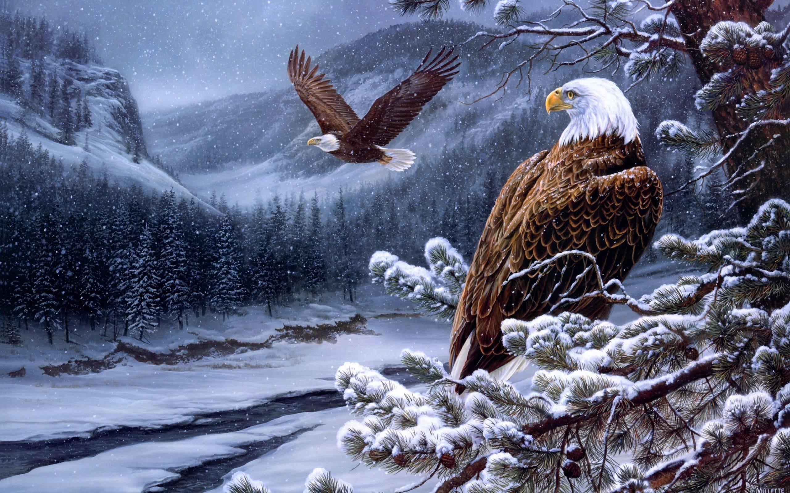 Bald Eagle Wallpaper Wallpapertag