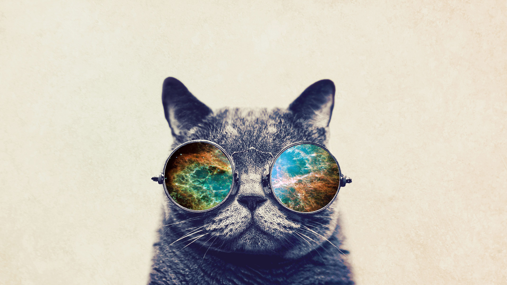 Cool Cats Wallpapers 183 ①