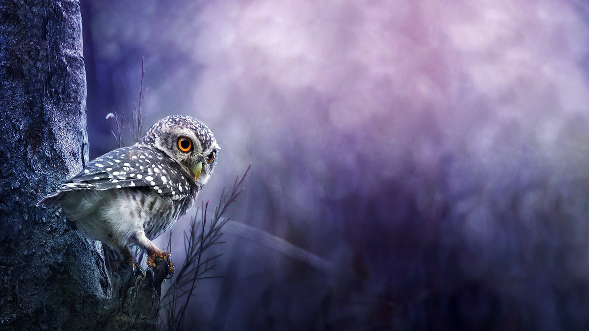 Very cute backgrounds cute voltagebd Images