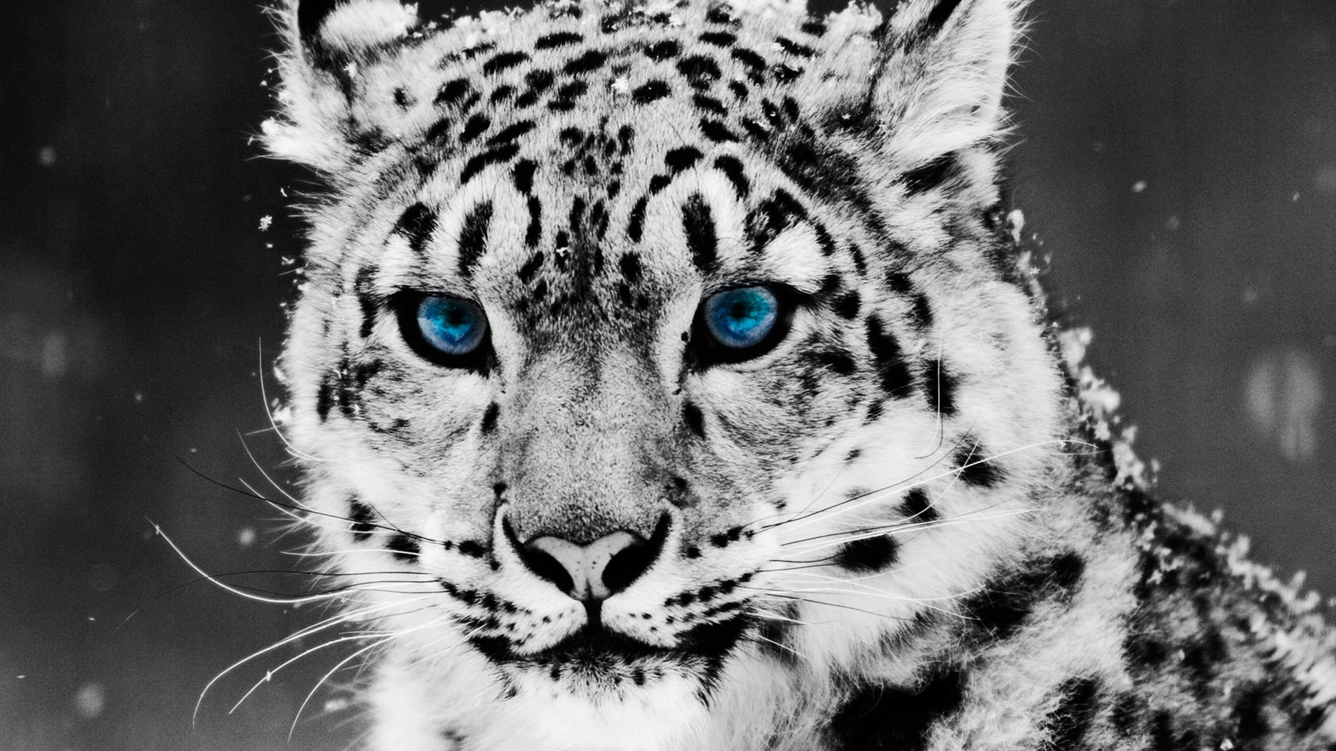 47+ cool animal wallpapers ·① download free beautiful high