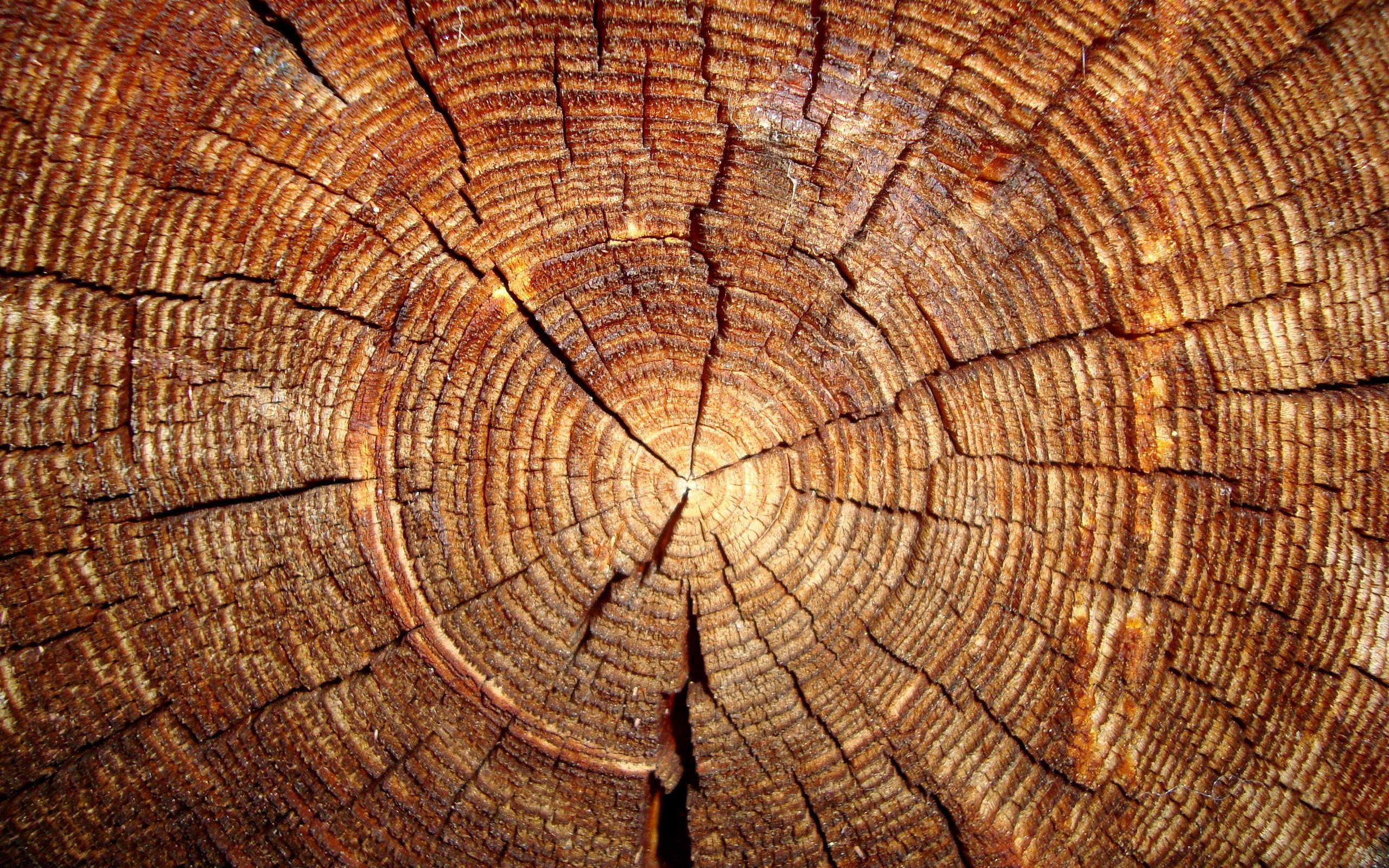 Wood hd wallpaper 50 hd wood wallpapers for free download voltagebd Choice Image