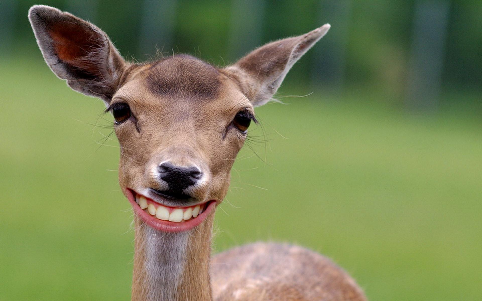 deer background pictures