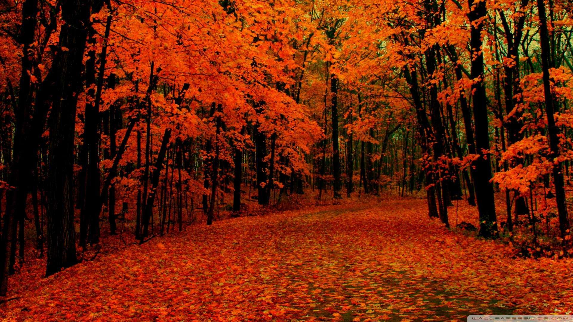 Fall wallpaper ·① Download free full HD backgrounds for ...