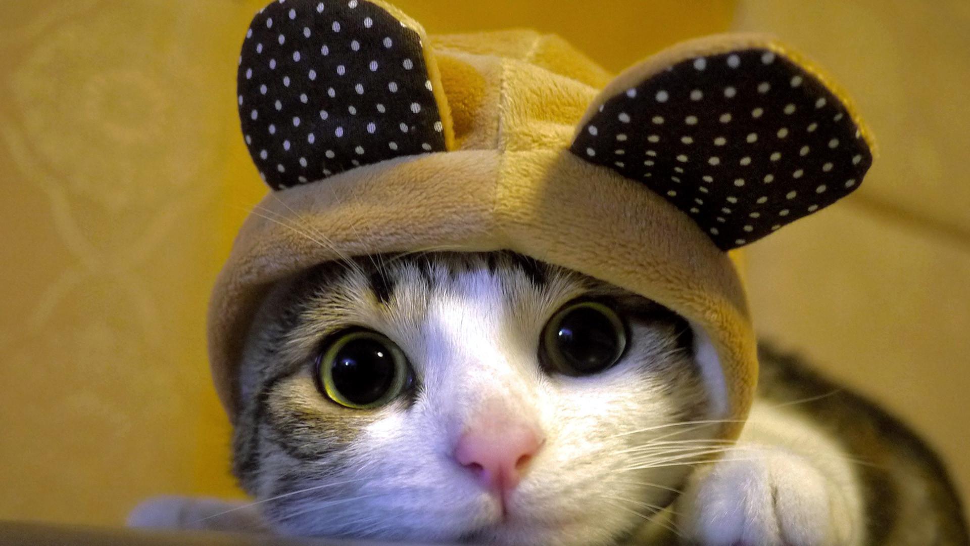 cute cats wallpaper ·①