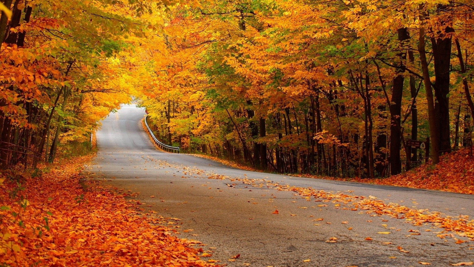 1920x1080 0 1920x1080 Autumn Forest Scenery Wallpaper 1920x1080 Autumn Forest Street Wallpaper