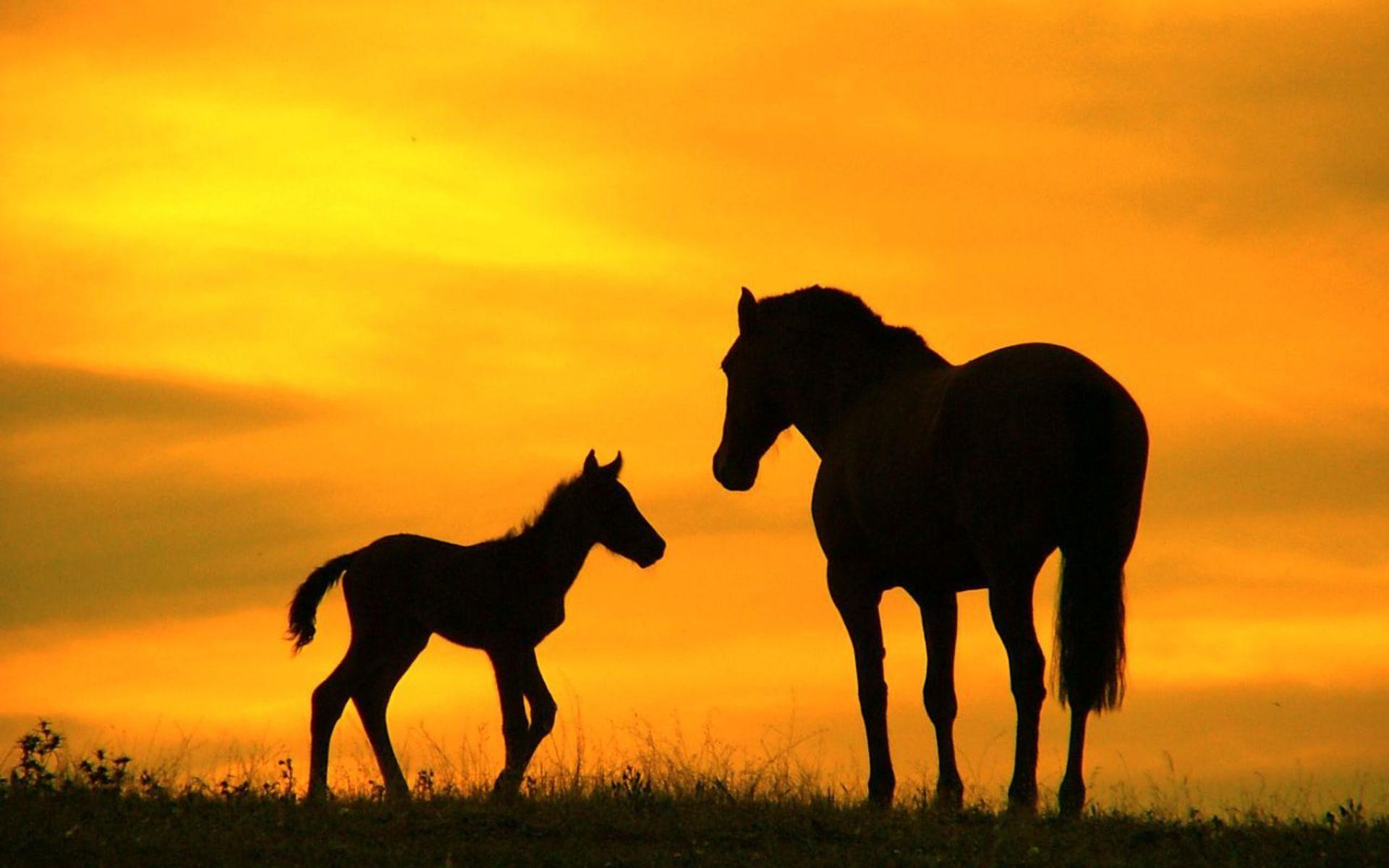 60 horse backgrounds download free stunning high resolution 1920x1200 horses pictures family horse ranch free desktop background free voltagebd Choice Image