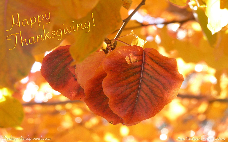 Thanksgiving Background Wallpaper 1