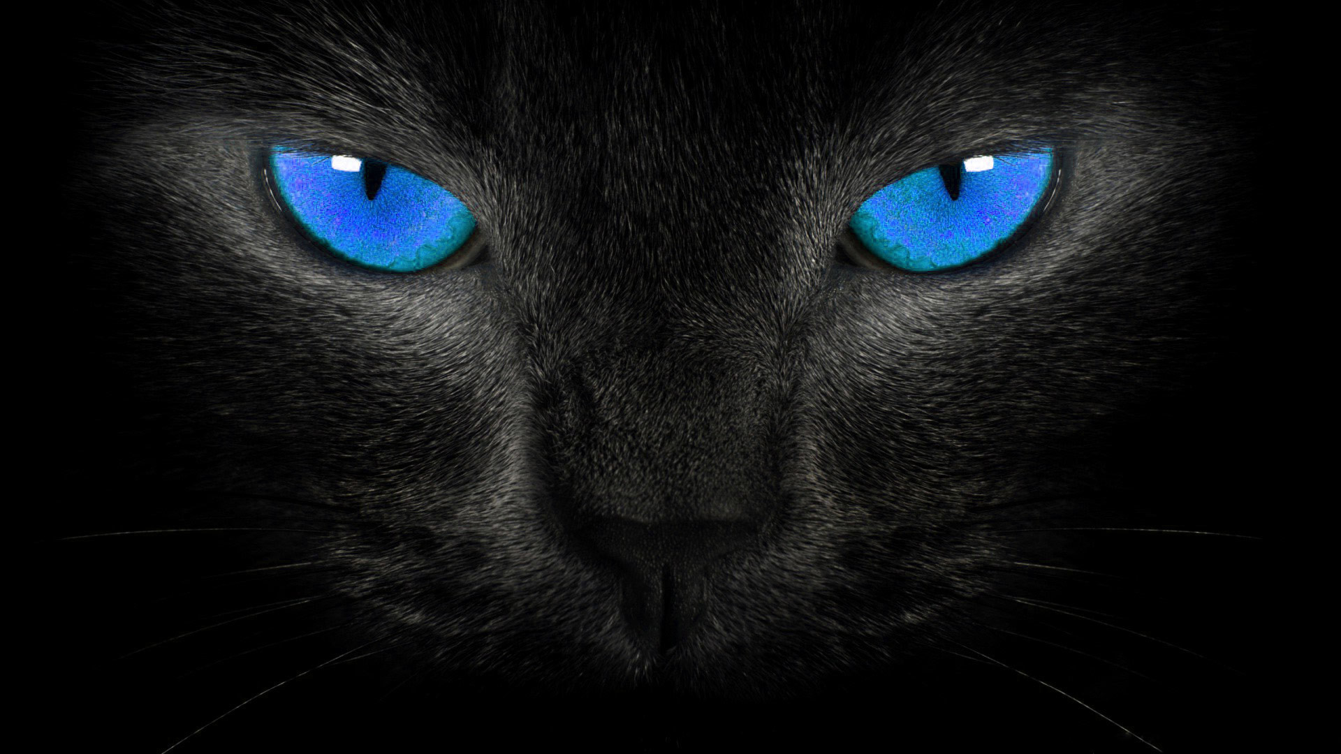 831107 most popular black cat wallpapers 1920x1080 for samsung