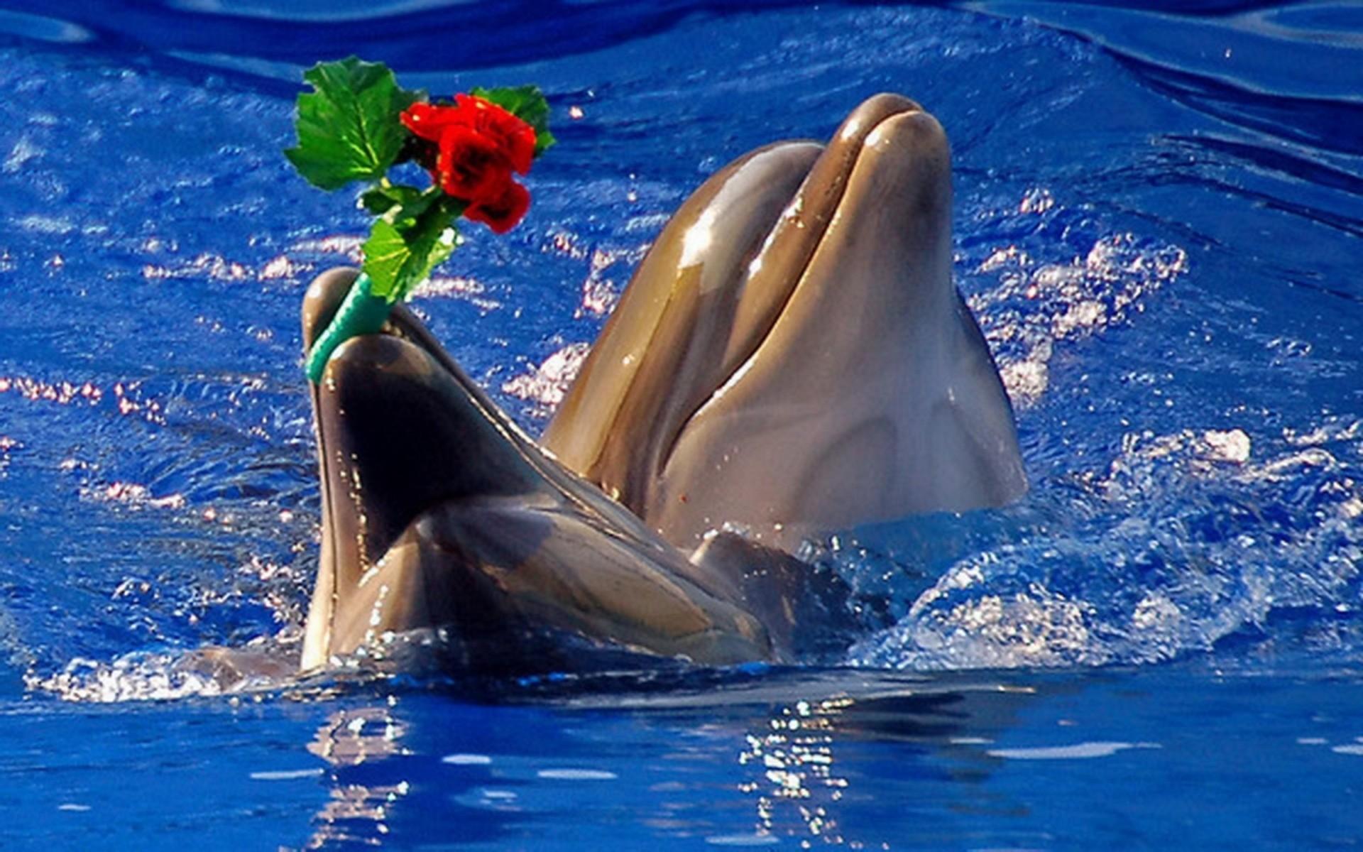 Cute Dolphin Wallpaper ·①
