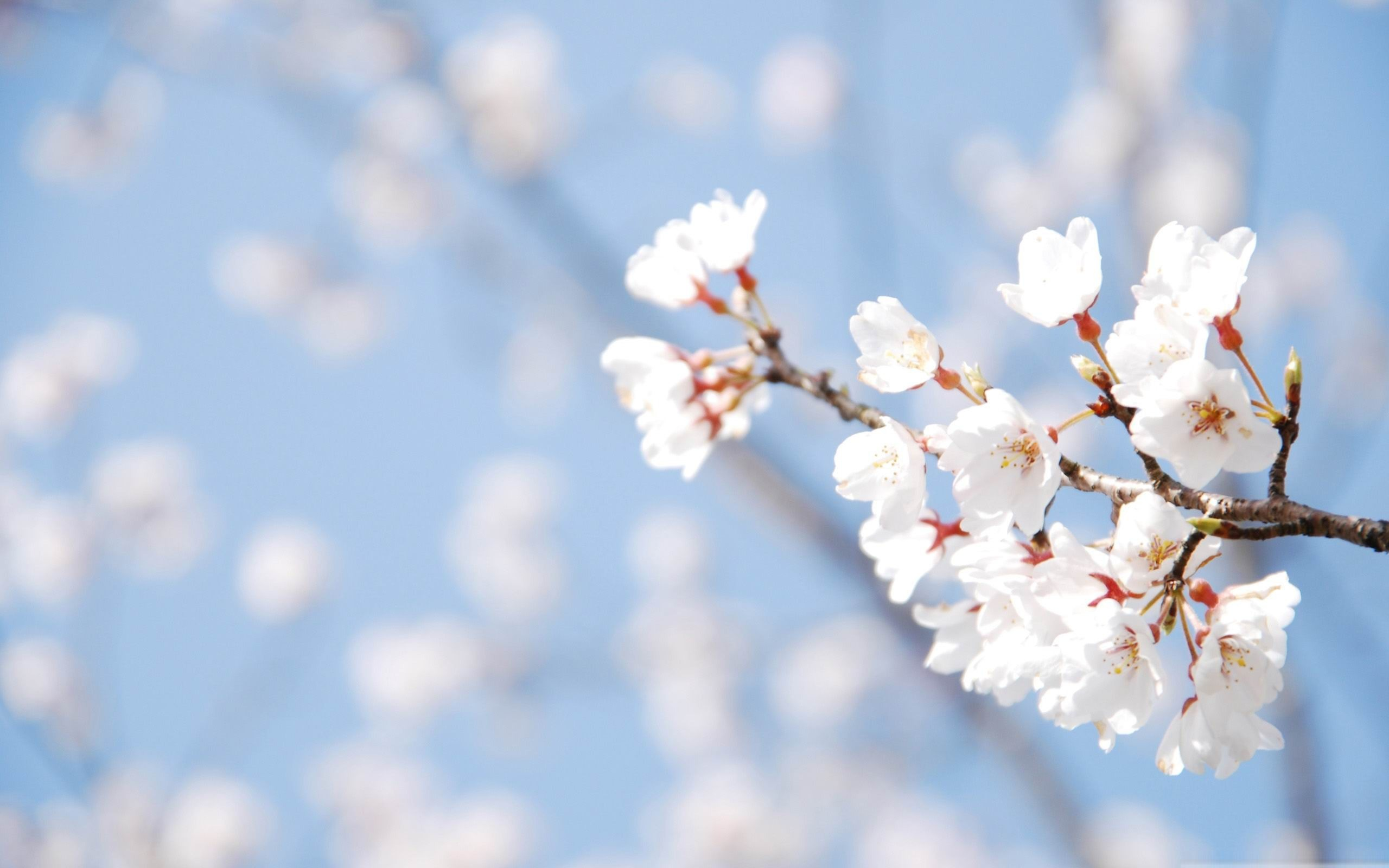 Spring Theme Wallpaper ·① WallpaperTag