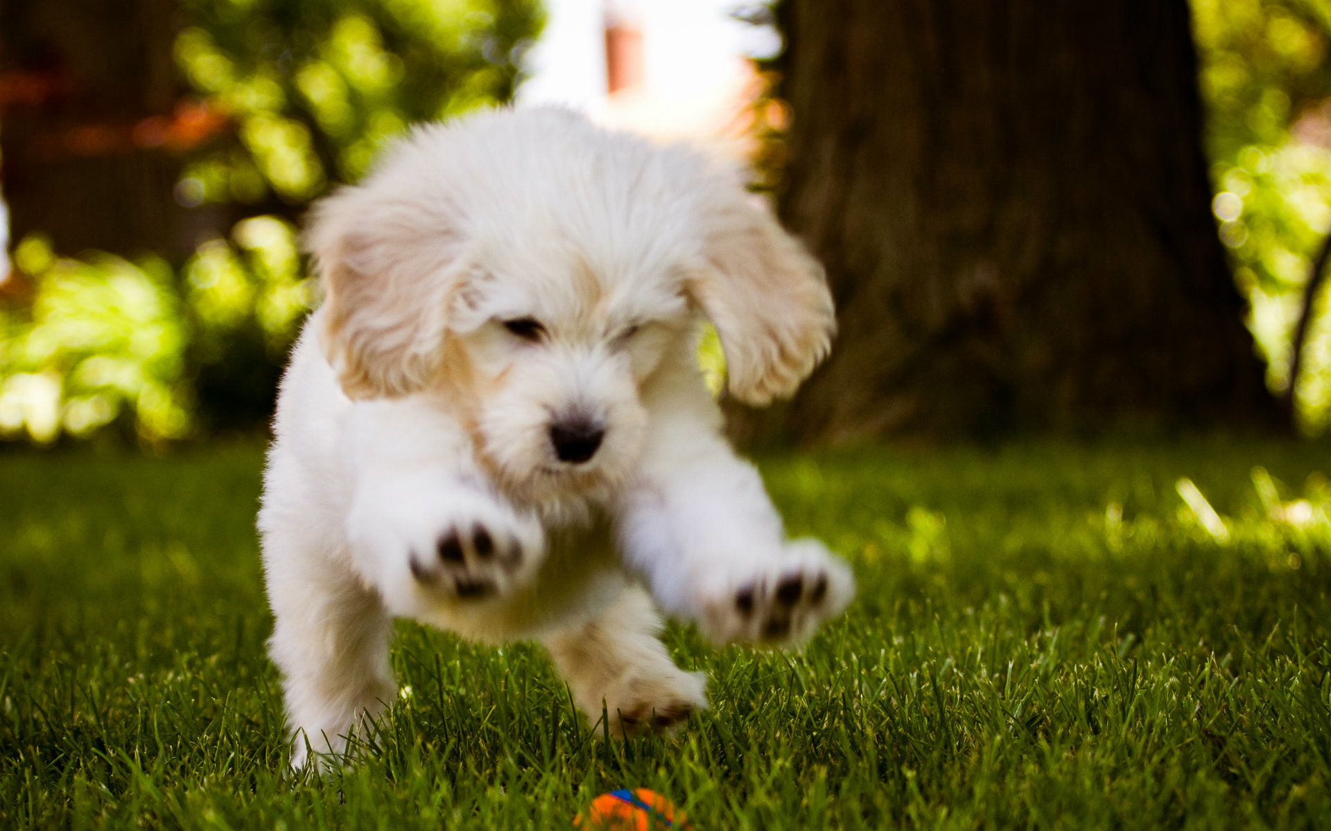 cute puppy wallpaper free download