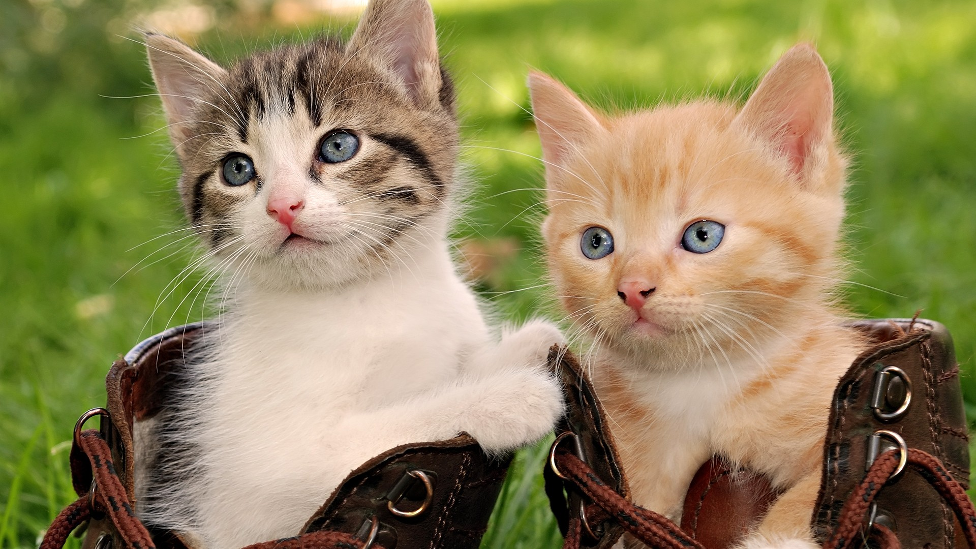 1920x1080 Double Cat Wallpaper HD Wallpapers, Backgrounds, Images, Art Photos. Download · Cute Cat wallpapers ...