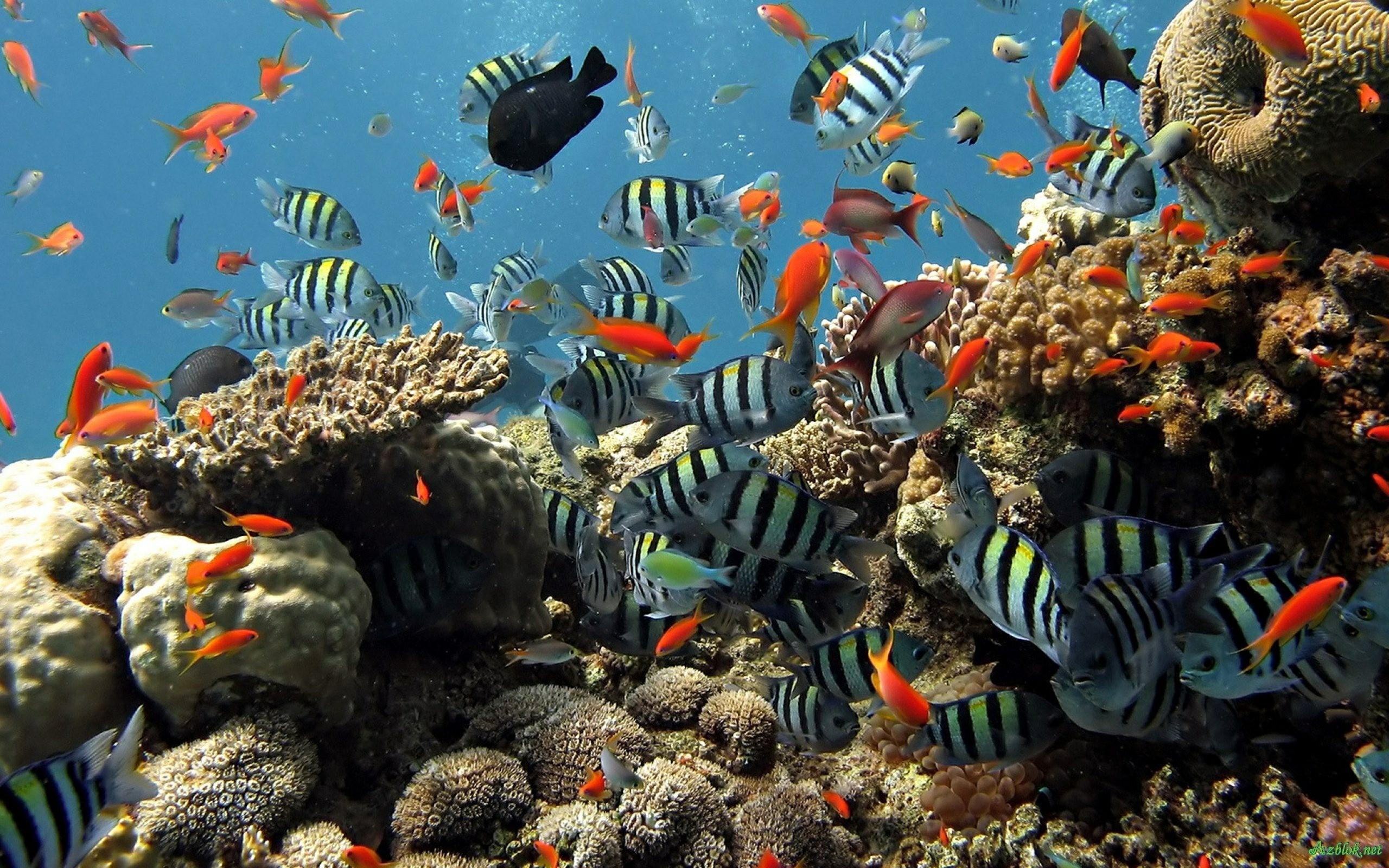 2560x1600 2560x1600 Aquarium Live Wallpaper For Pc Free Download · Download · 1920x1080