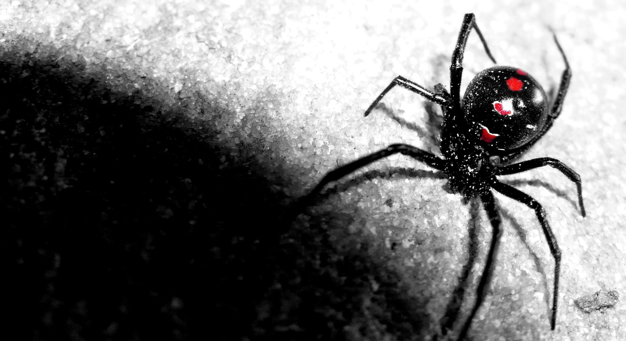 spiders wallpapers ·①