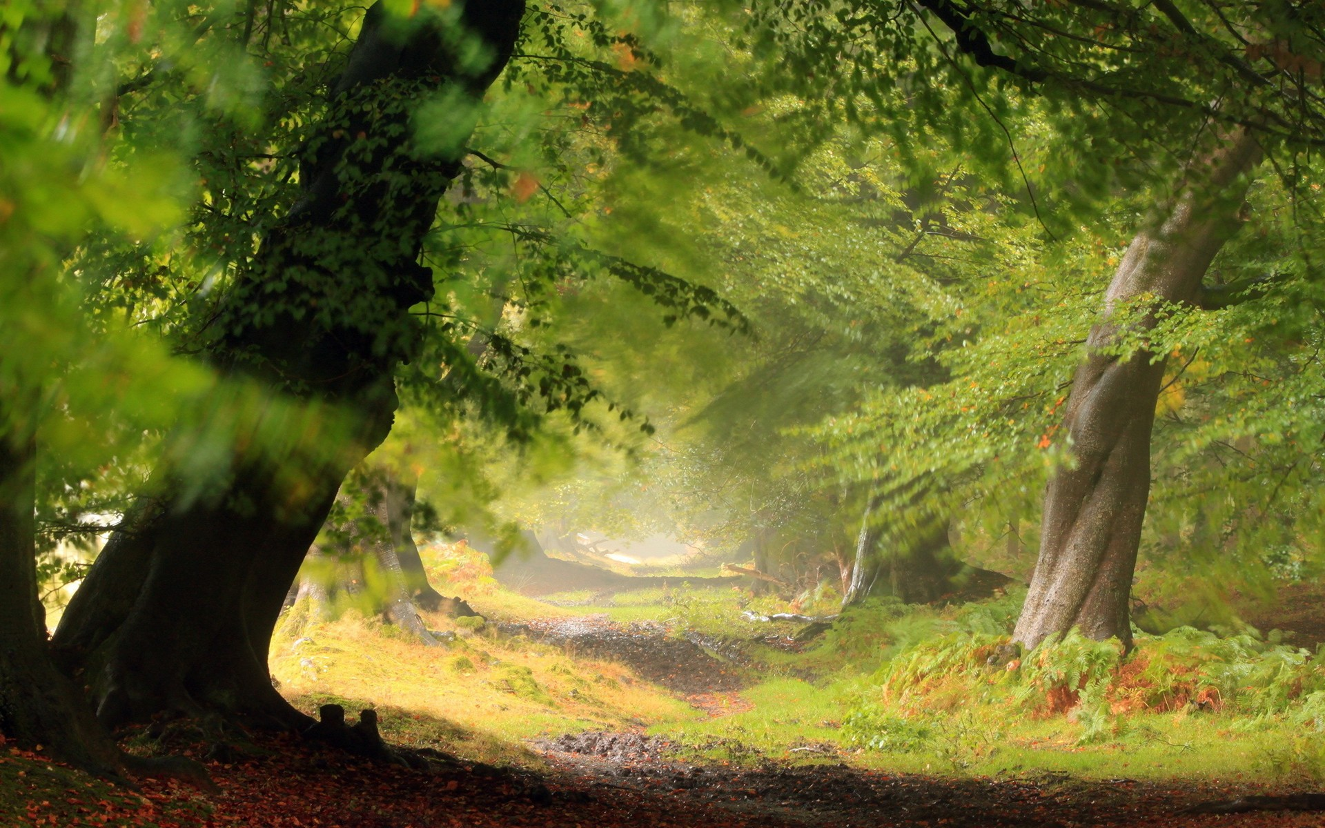 Forest wallpaper HD ·① Download free awesome backgrounds ...