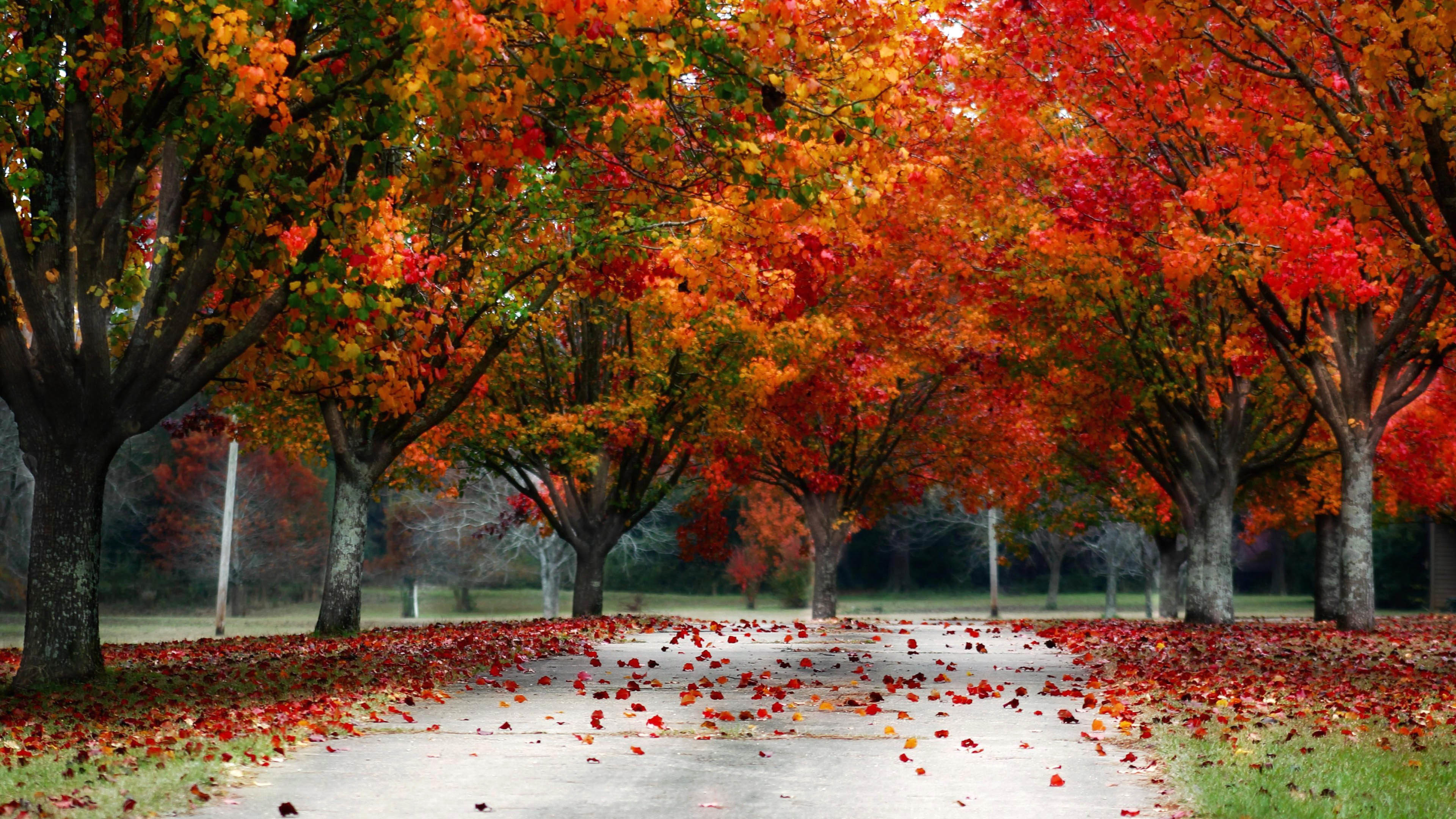 Autumn Tree Wallpaper 61 Images: Fall Trees Wallpaper ·① WallpaperTag