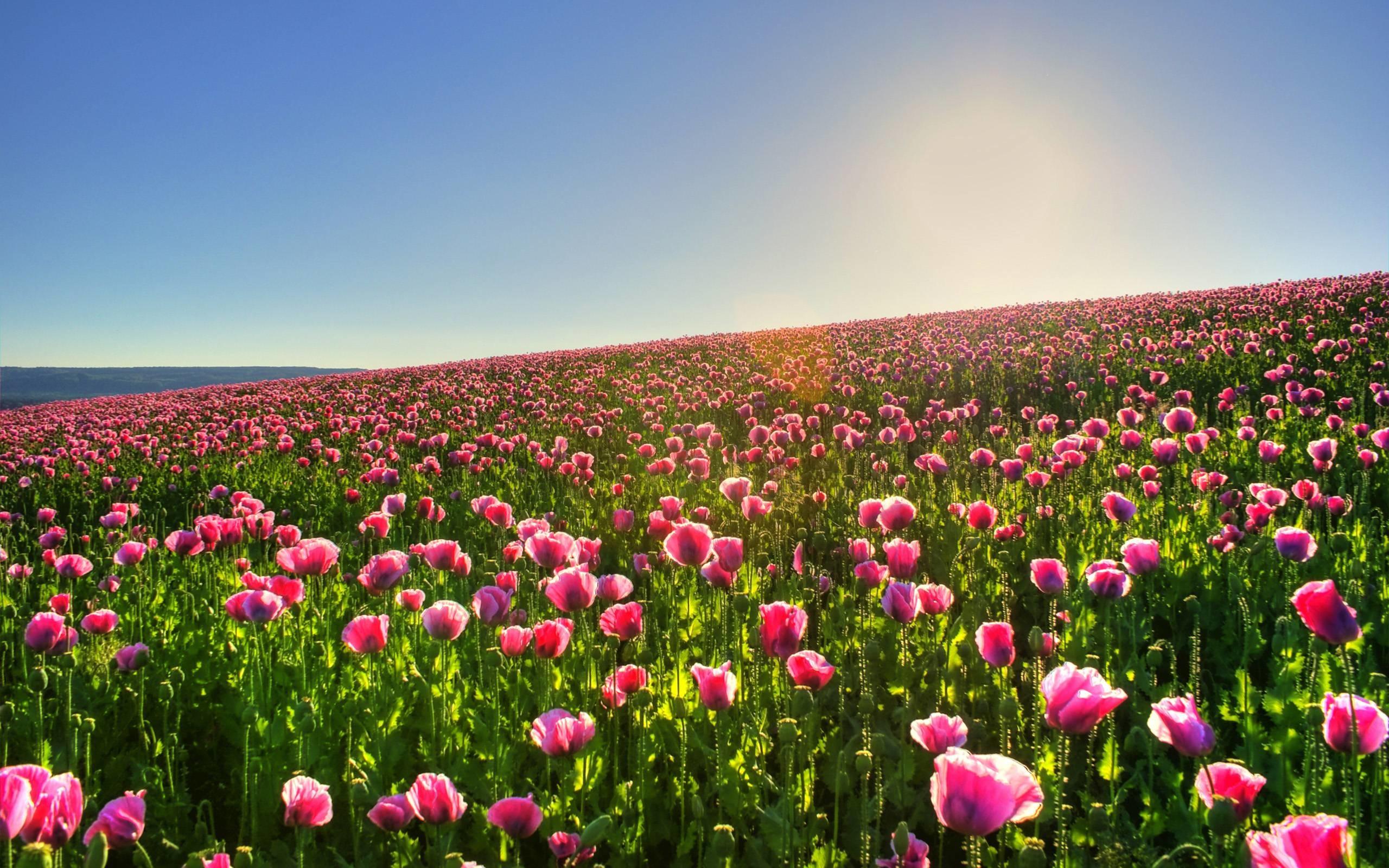 Flower Garden Background Wallpapertag