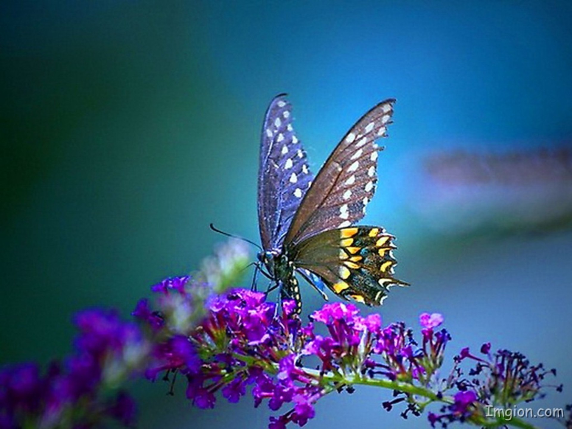 Cool Butterfly Backgrounds ·① WallpaperTag