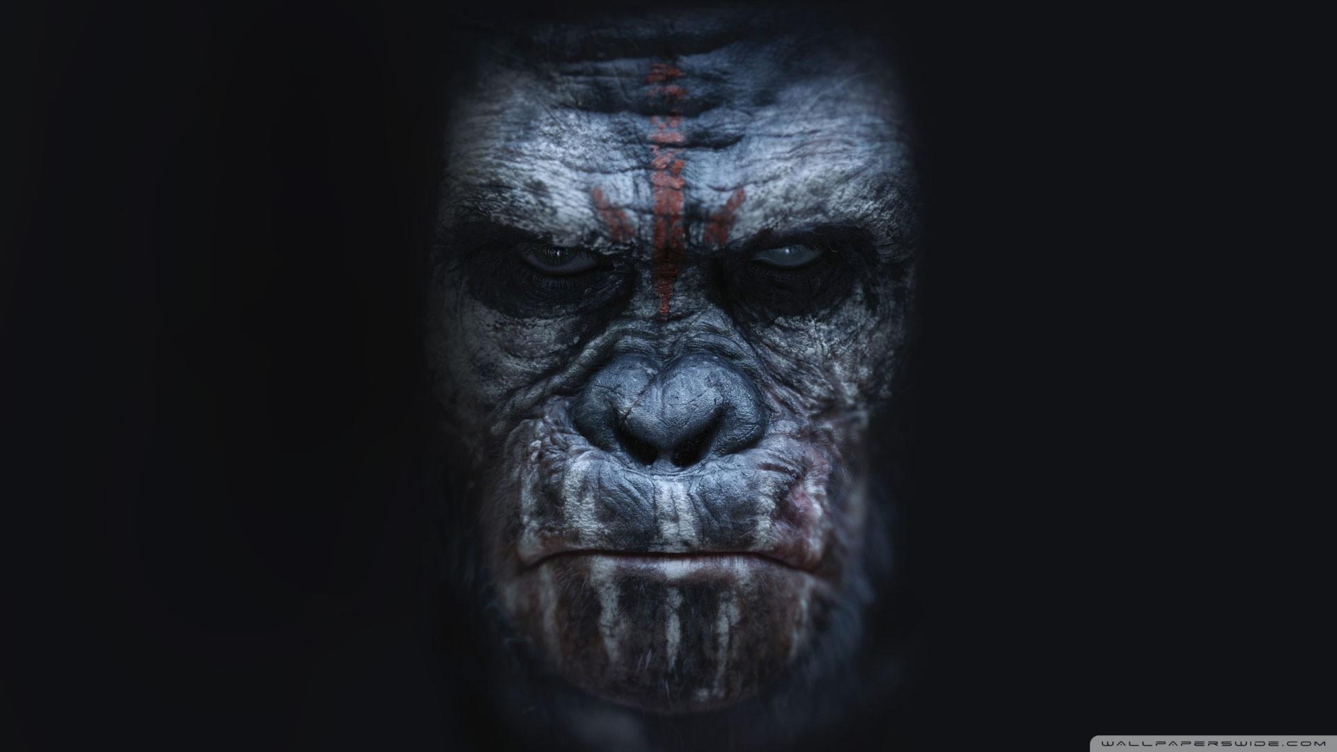 Ape Wallpaper Wallpapertag