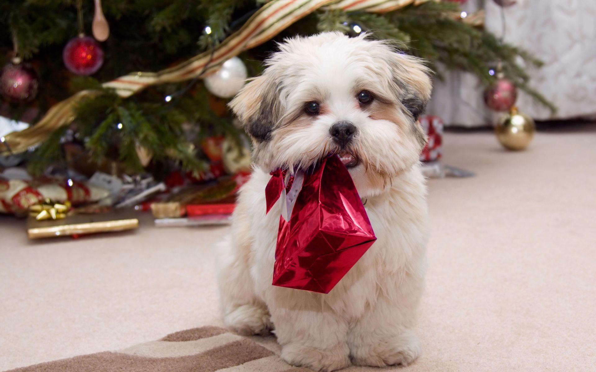 Canon papercraft: animals paper model shih tzu dog free download.