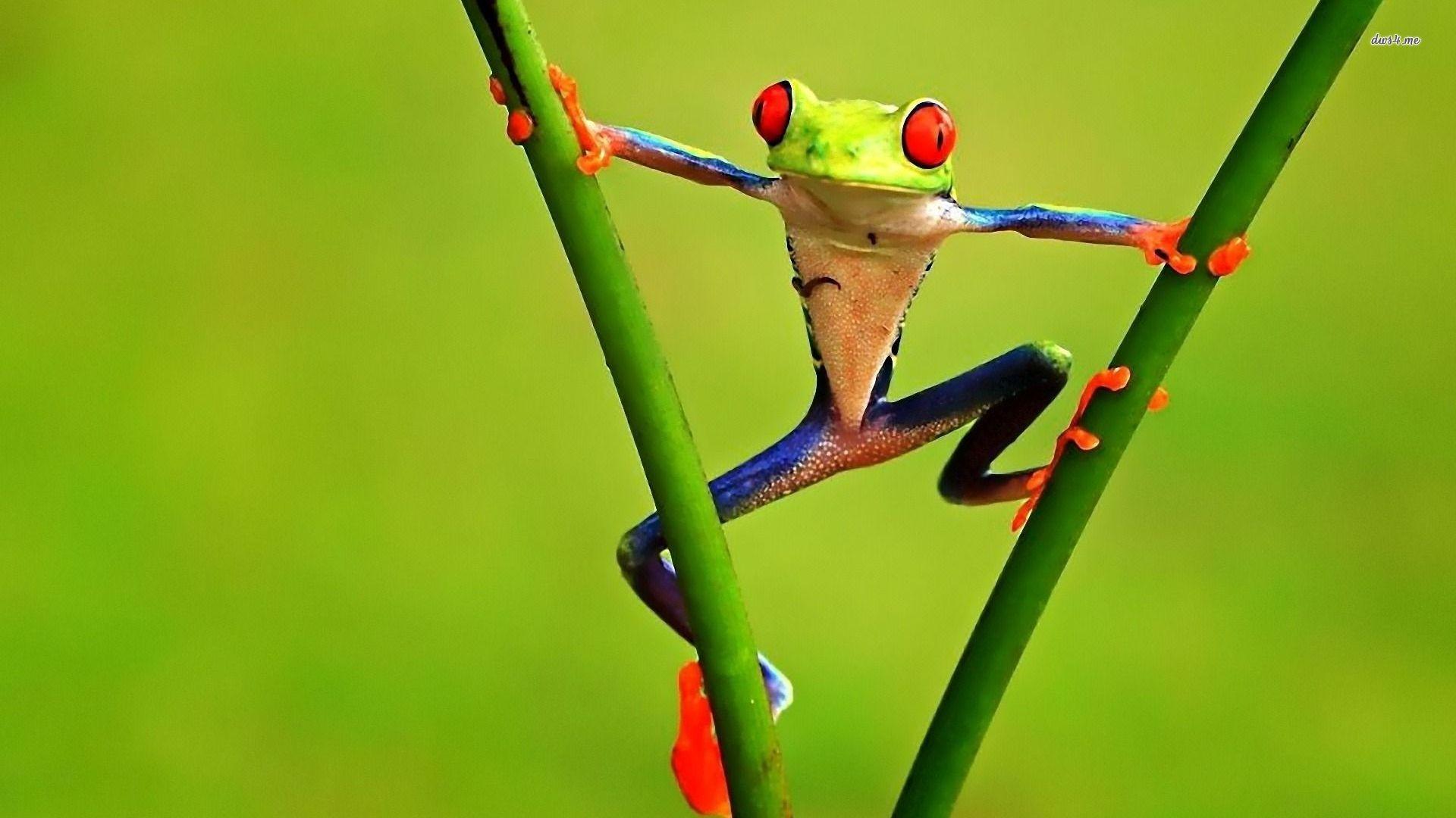 природа цветы животное лягушка  № 3068645  скачать
