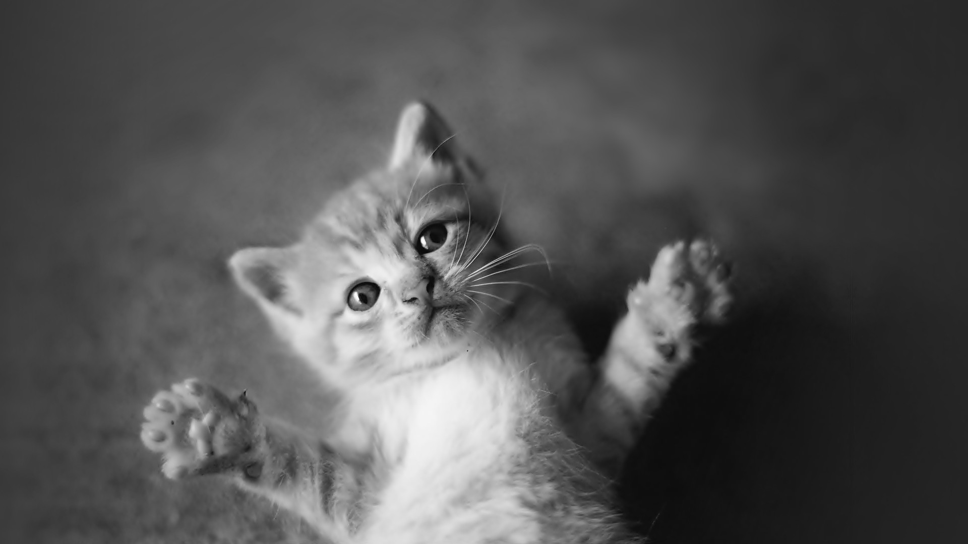 black and white cat wallpaper ·①