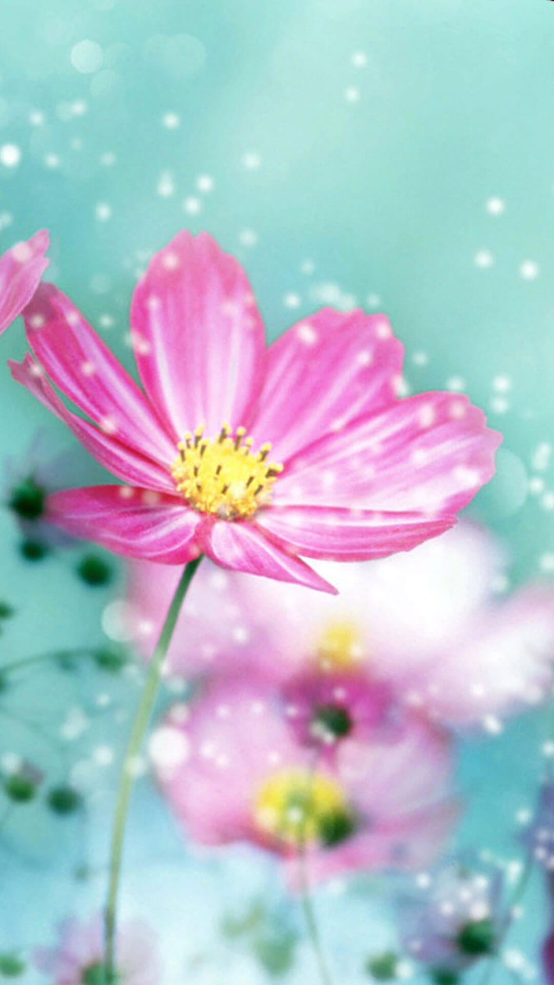 Spring Flower Wallpaper Backgrounds ·① WallpaperTag