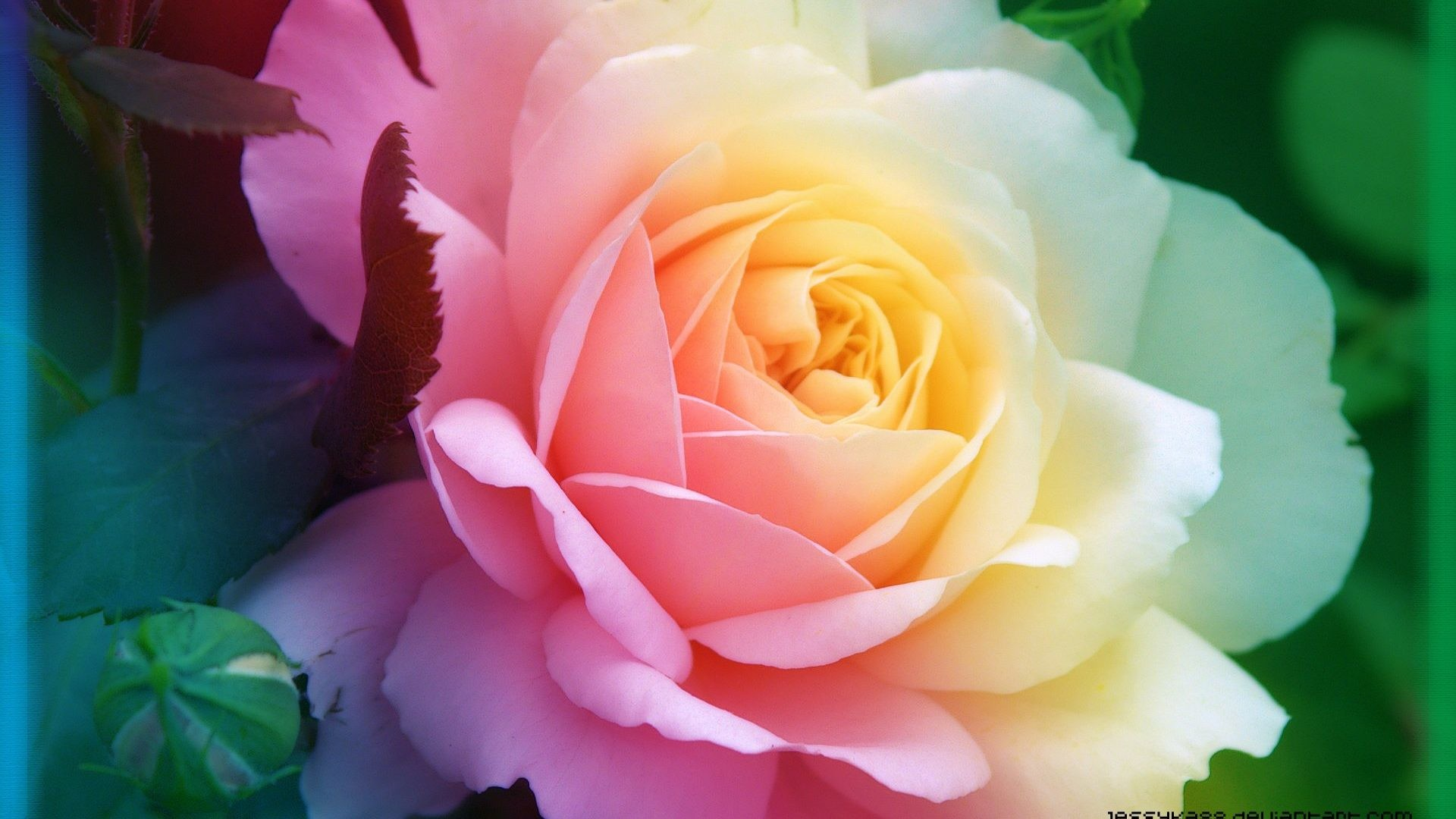 Pink Beauty Flower Single Rose: Cool Flower Wallpapers ·① WallpaperTag