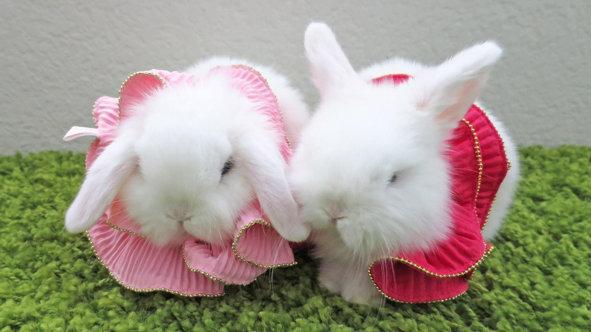 Baby Bunny Wallpaper ·①