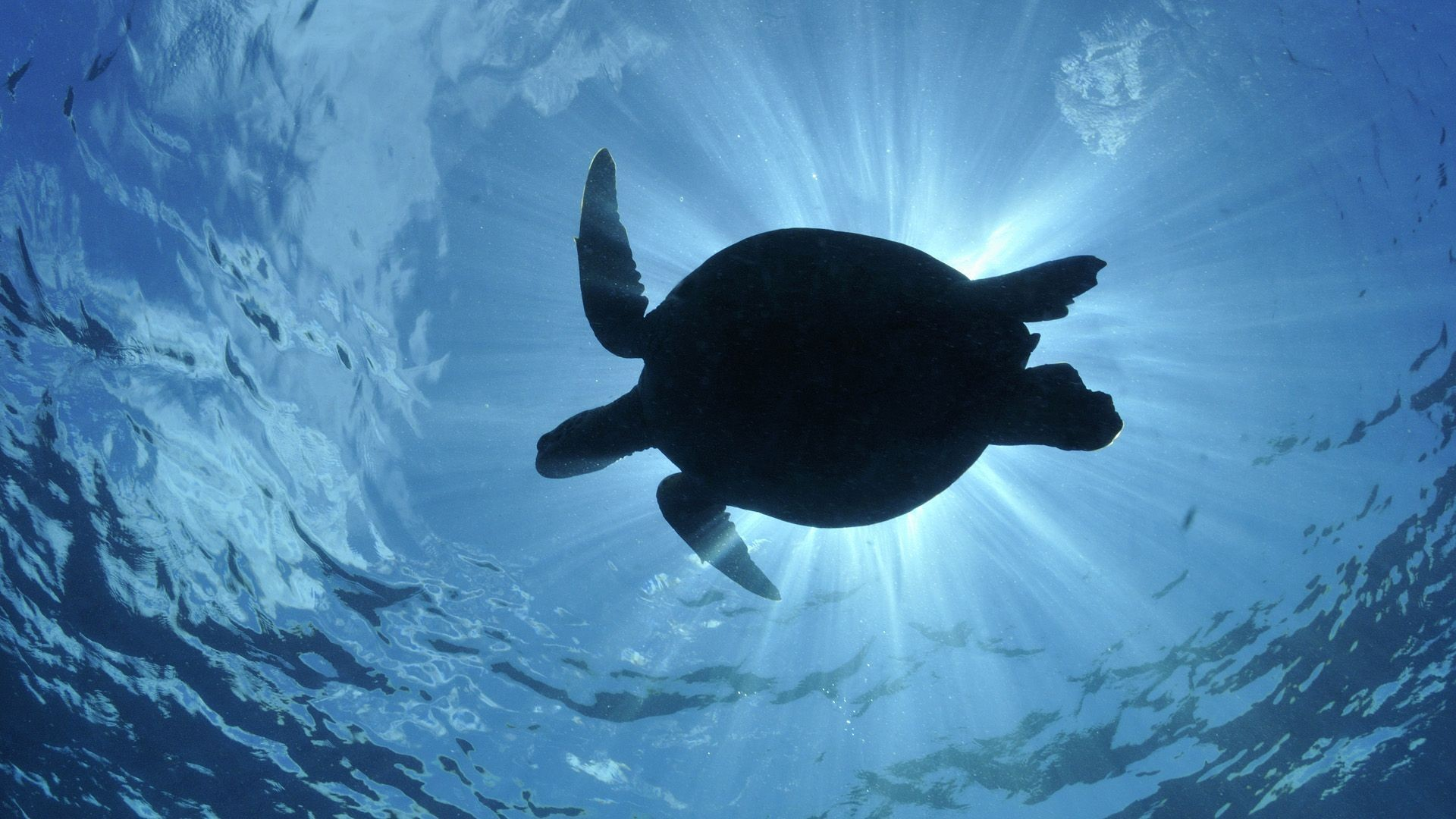 Turtle Wallpaper ① Download Free Stunning Hd Backgrounds For